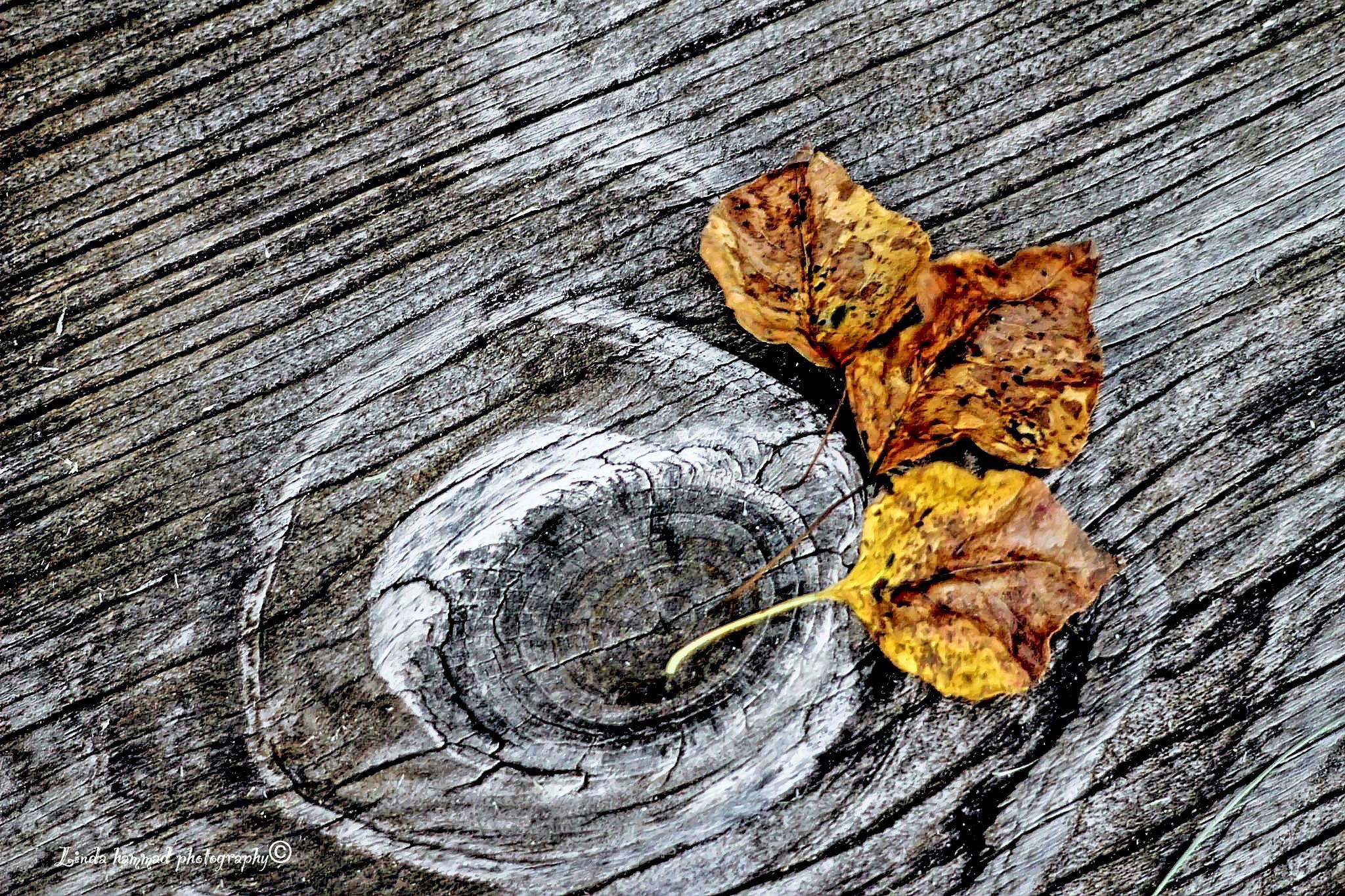fallen leaves  by Linda Hammad