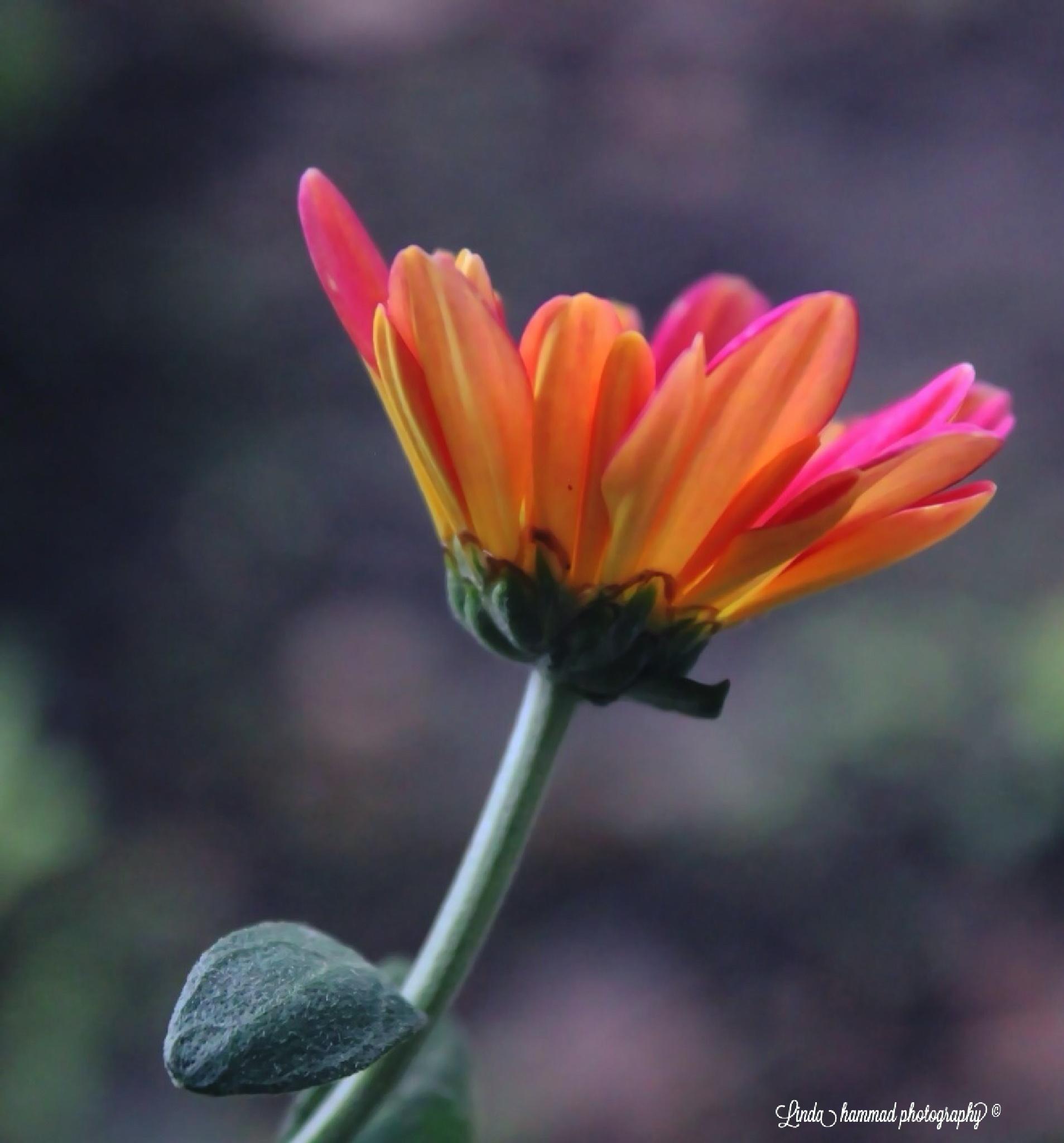Pretty color  by Linda Hammad