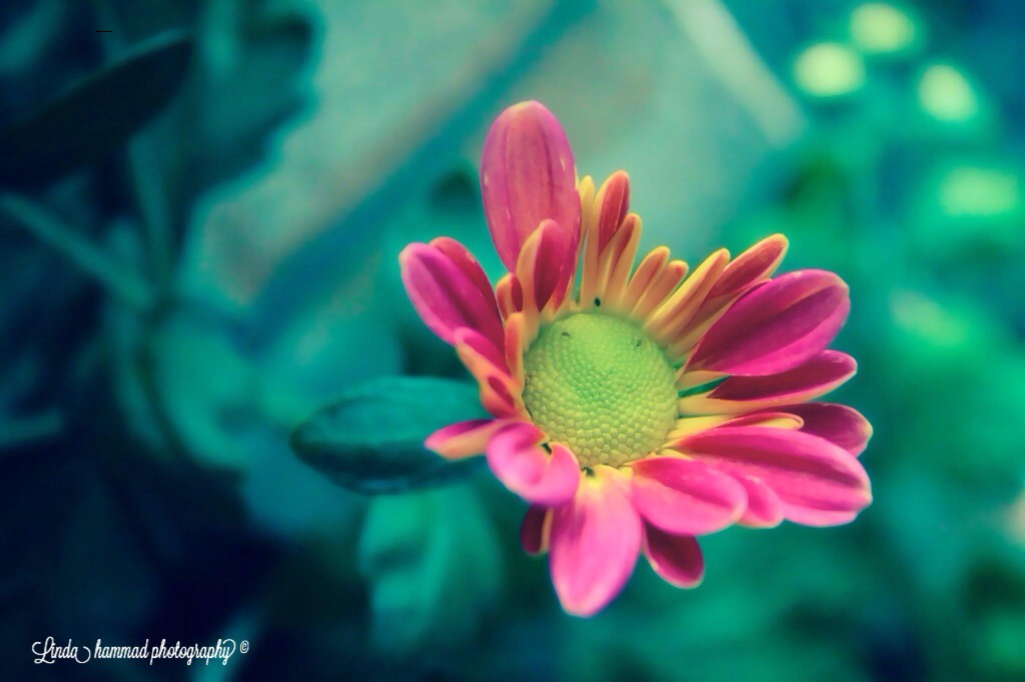 Soft beauty by Linda Hammad