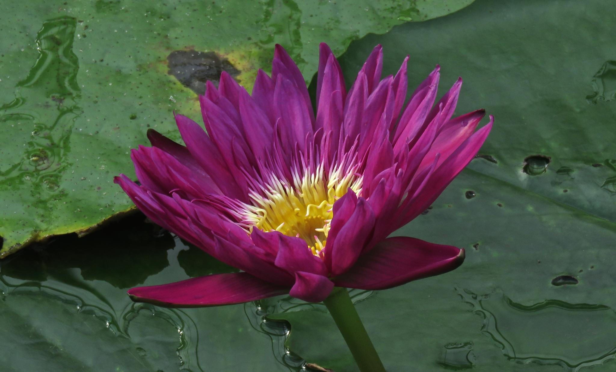Photo in Nature #flower #star #water