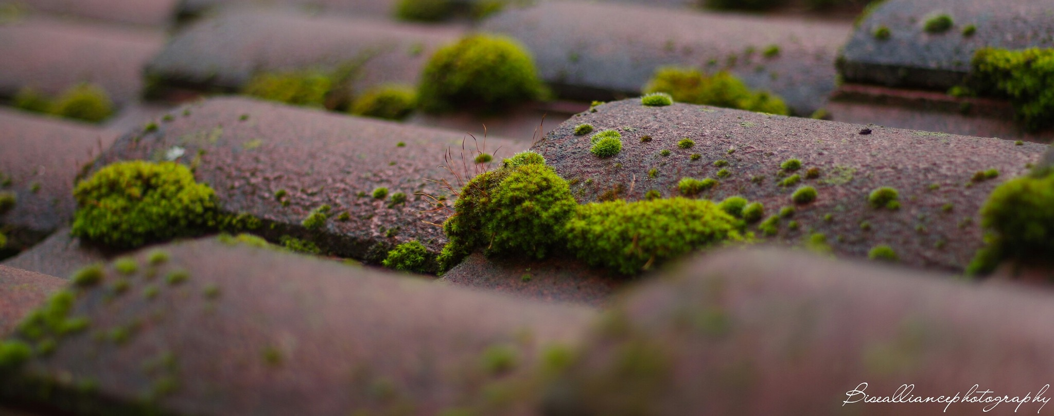 Moss growing on some shingles  by Brayden Bise