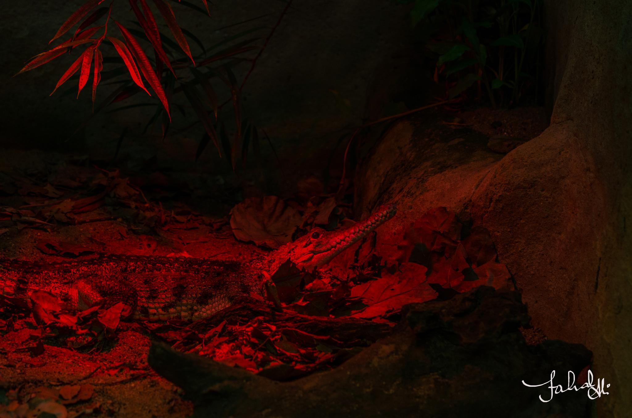crocodile by Fahad Bhatti