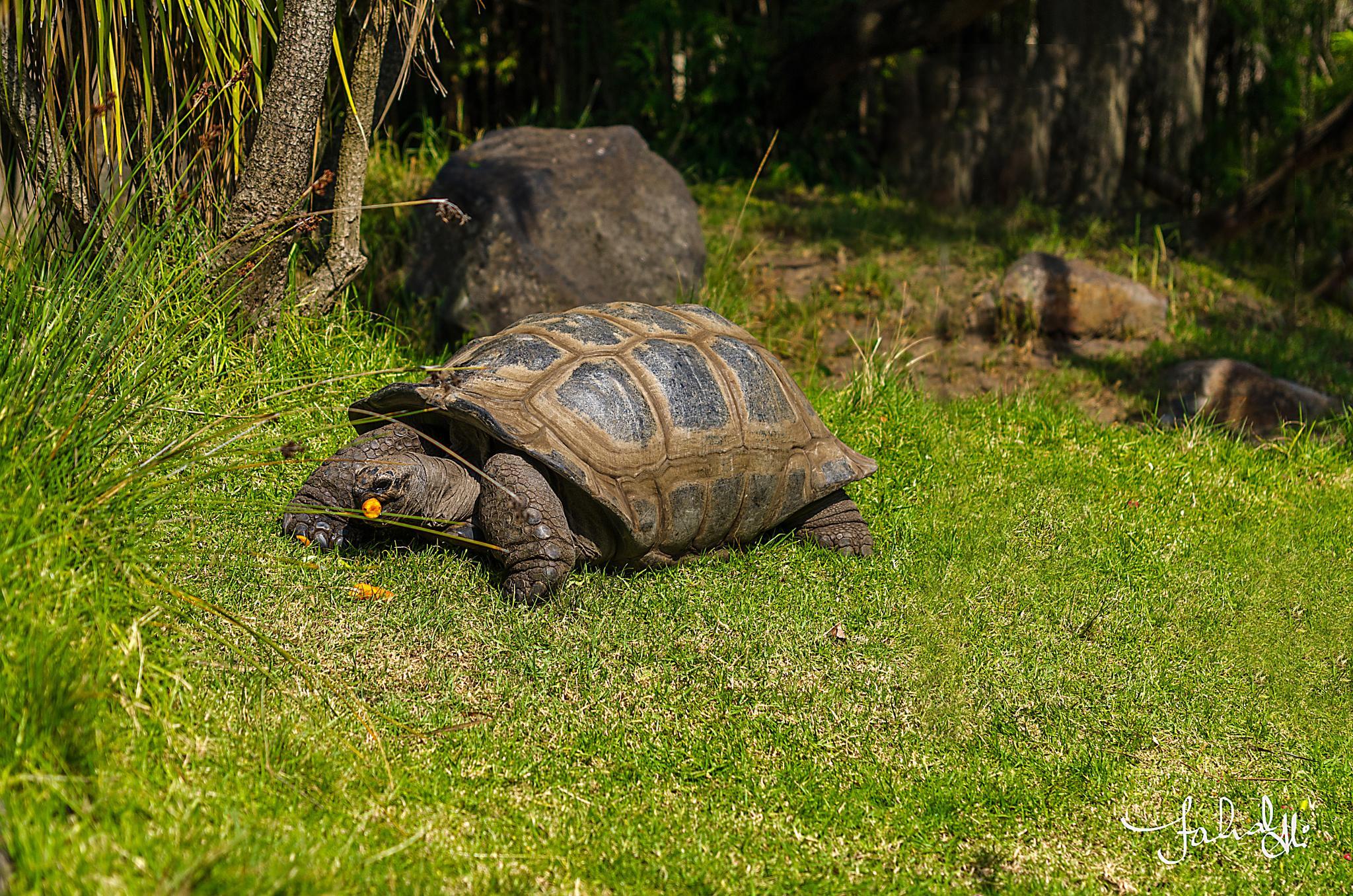 Giant Tortoises by Fahad Bhatti