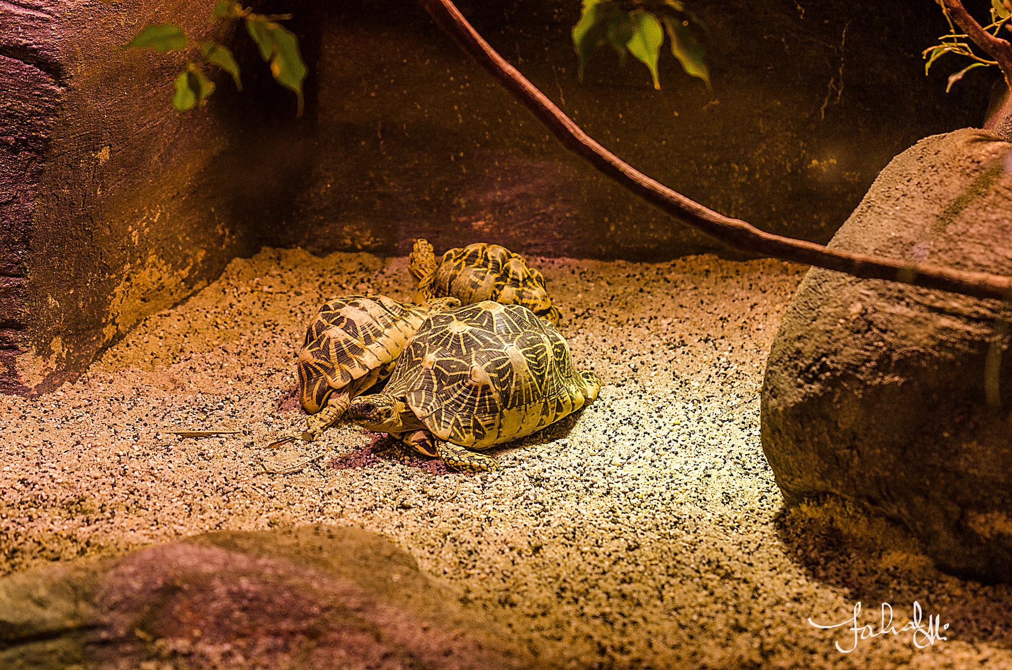 tortoises by Fahad Bhatti