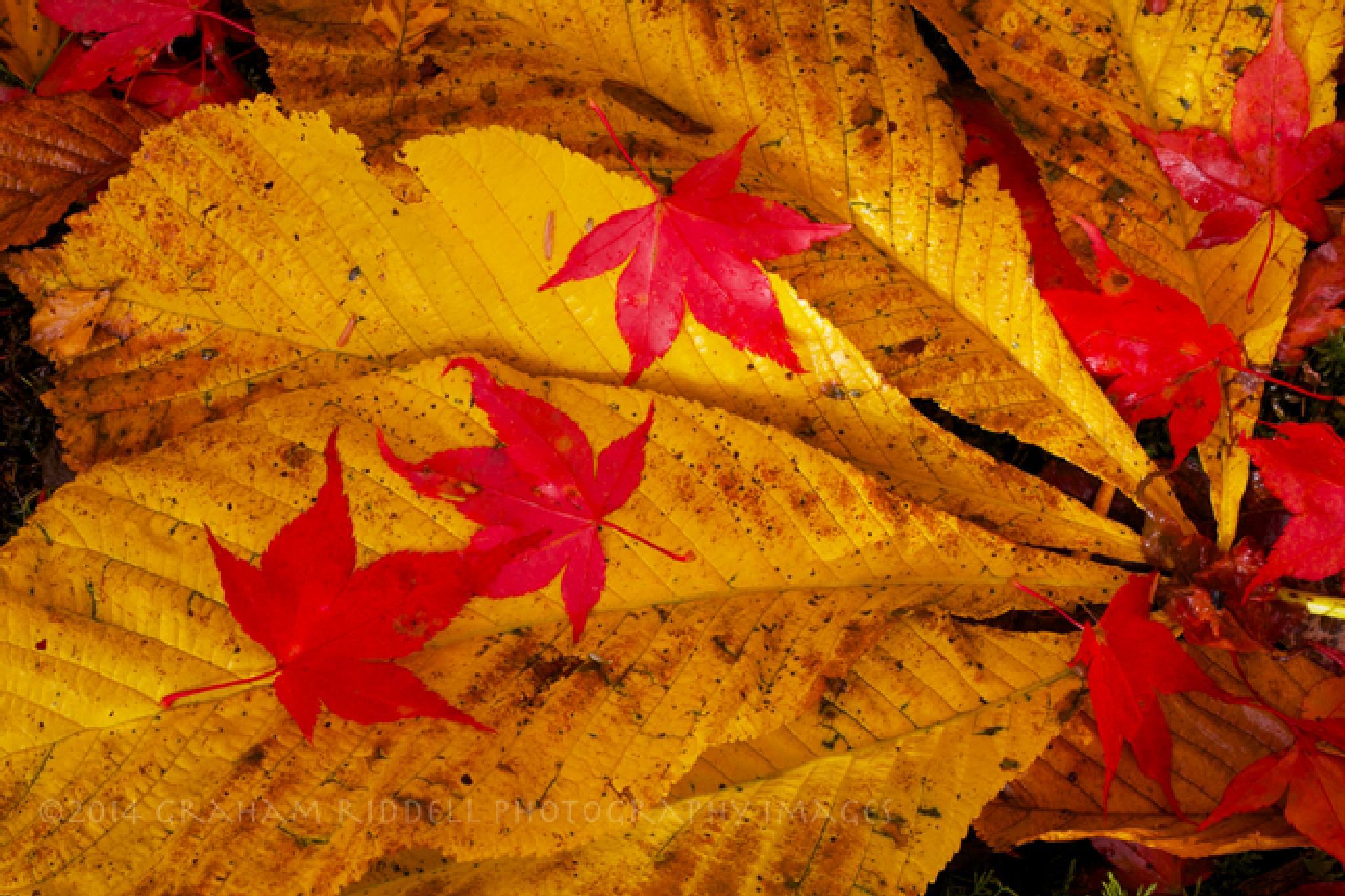 Autumn Stars by GrahamJRiddell