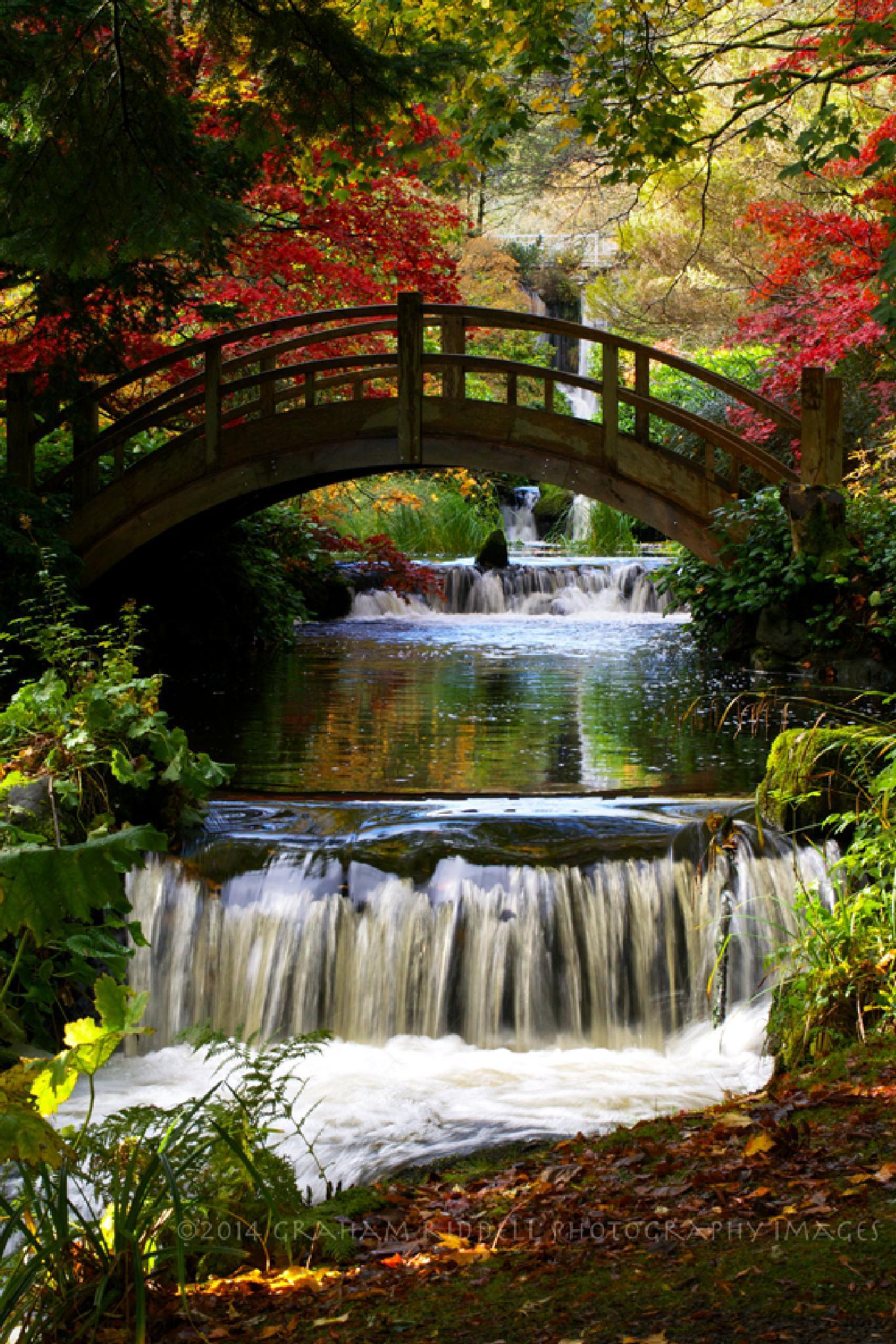 Japanese Bridge at Stobo in Autumn by GrahamJRiddell