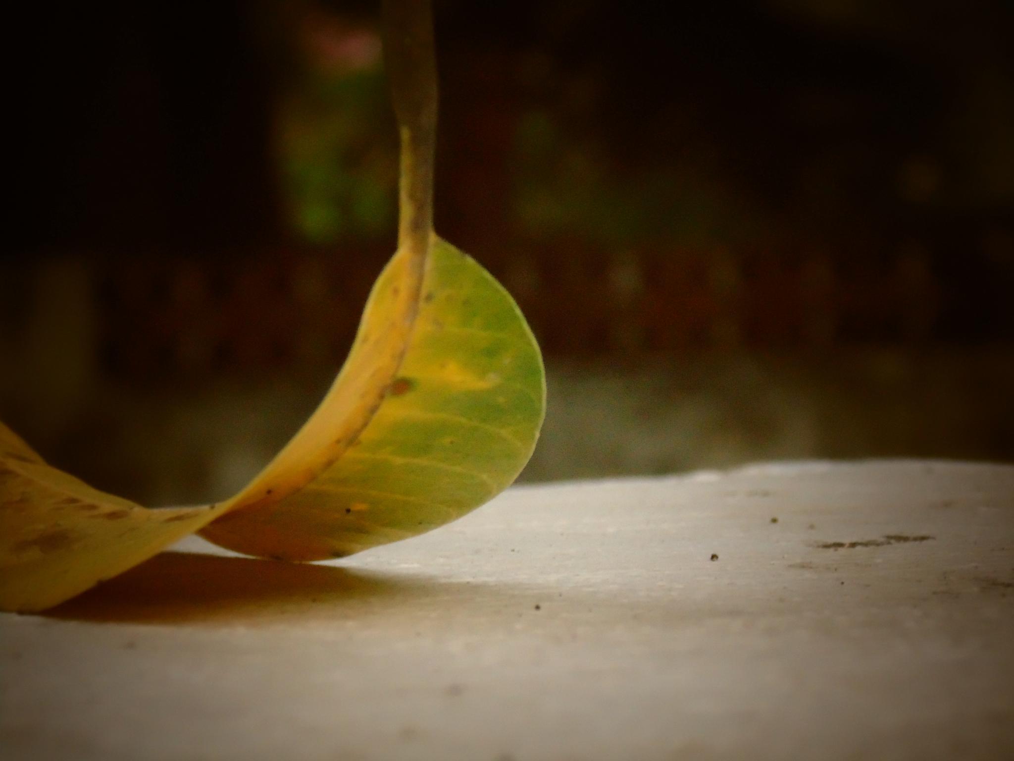 fallen leaf by Charles Paul