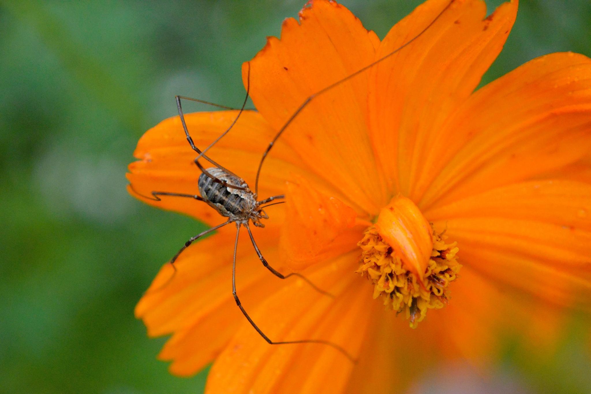 Spider by Michelle Farmer