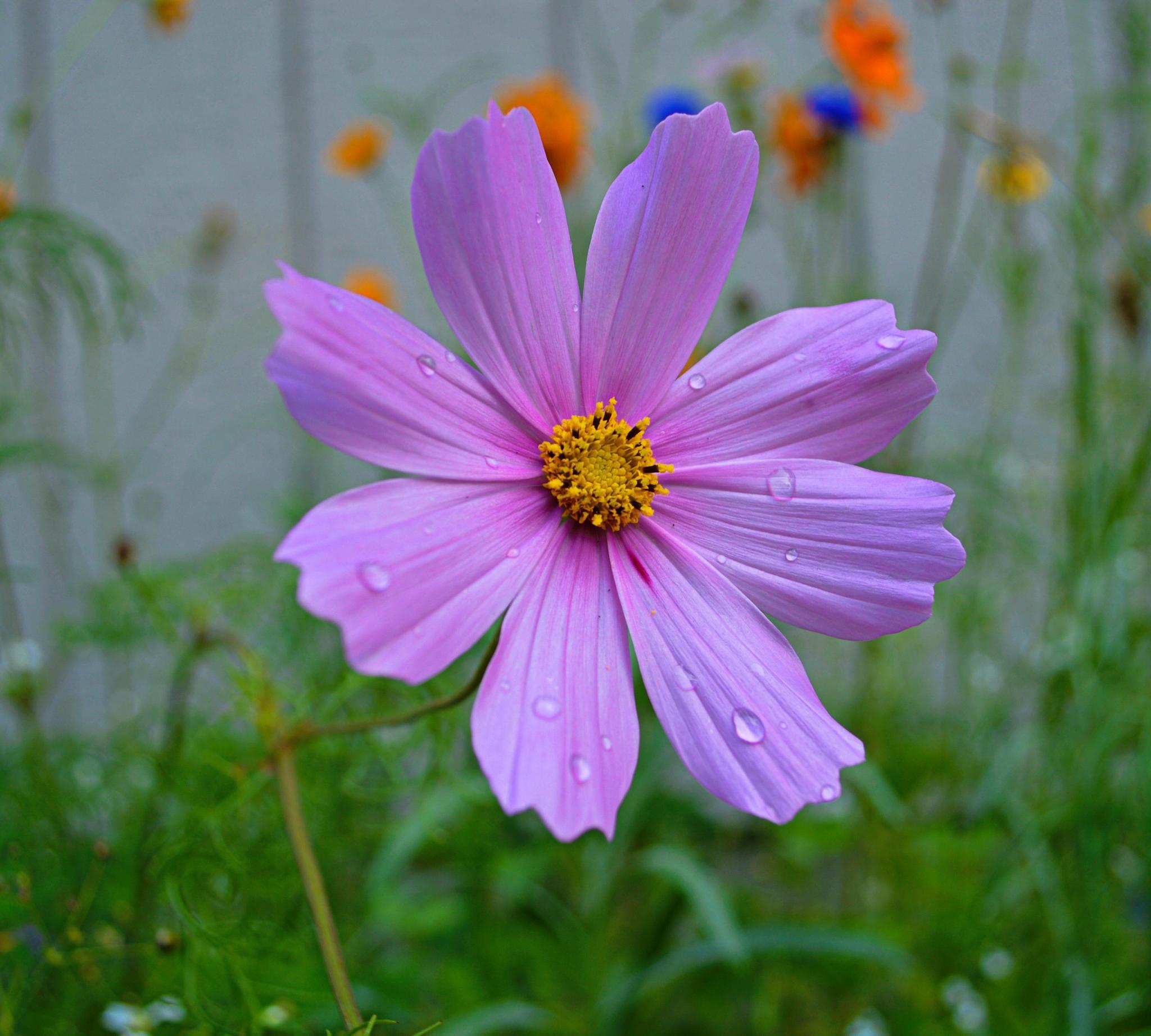 Flower by Michelle Farmer