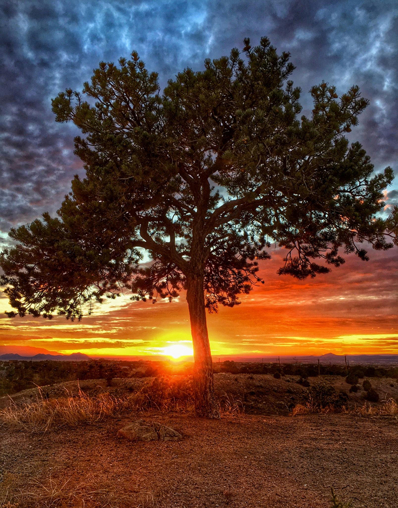 THE BURNING TREE by Bill Hitz