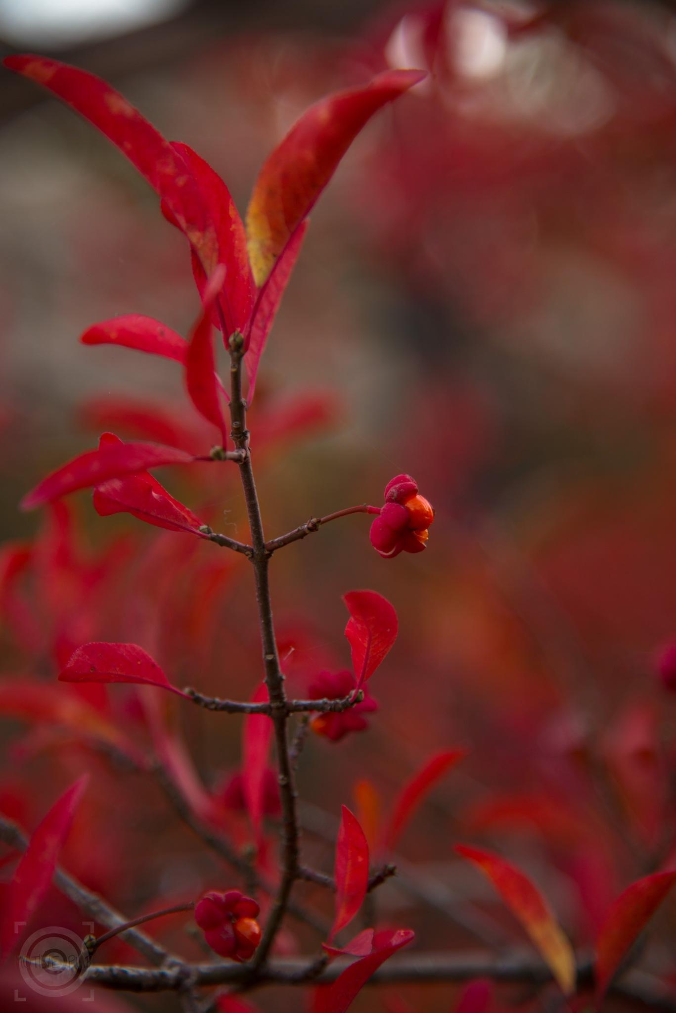 red III by Alexandra Bode