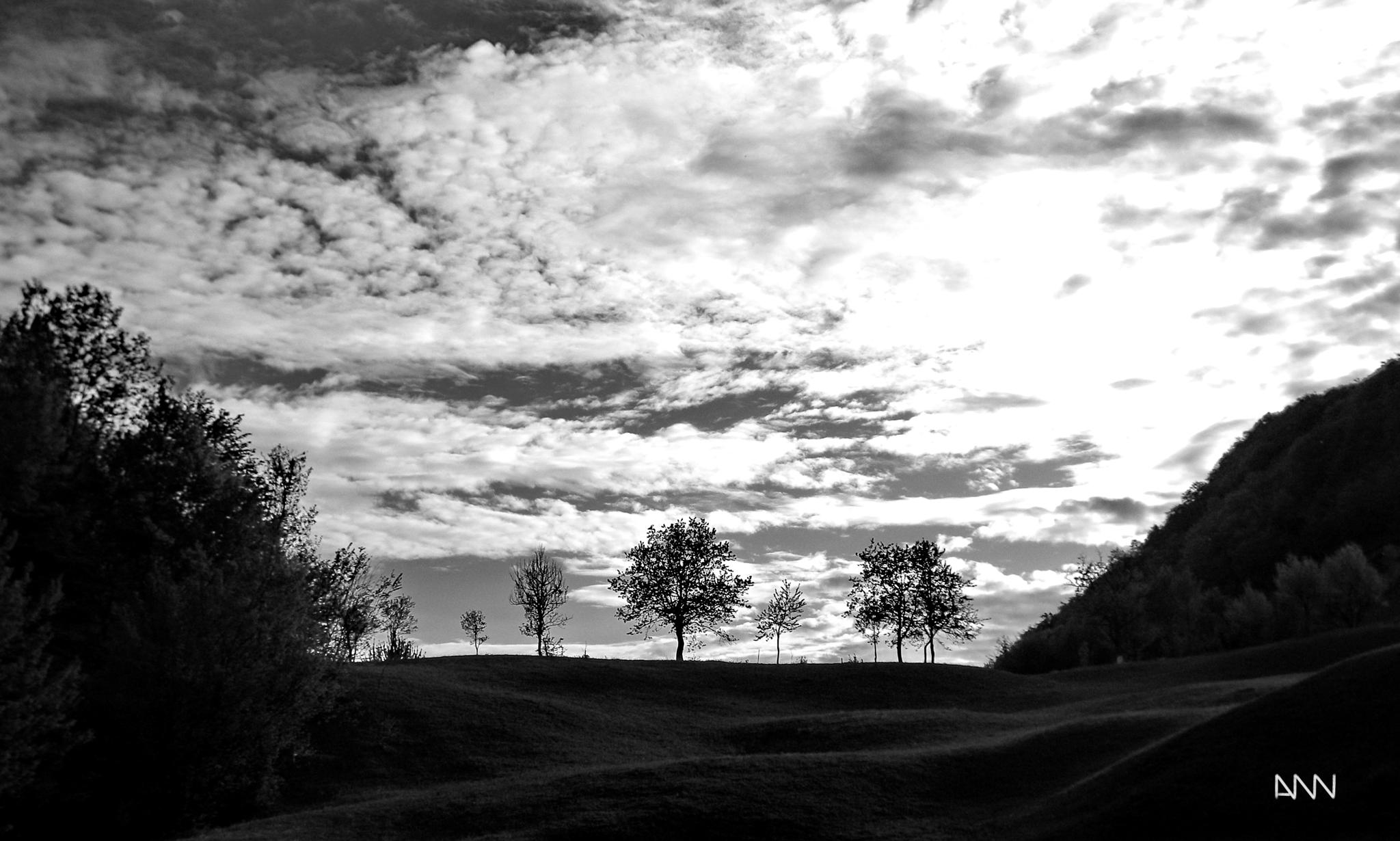 Photo in Black and White #trees #guarding #sky #standing