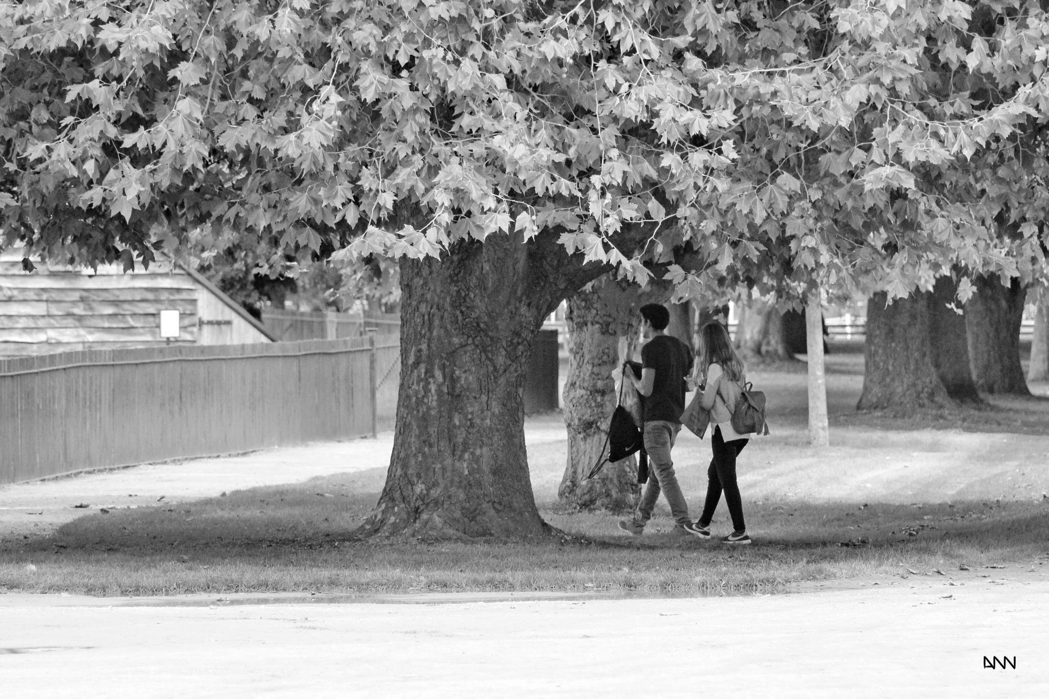 walk in the park by Anton Nistor Nicolae