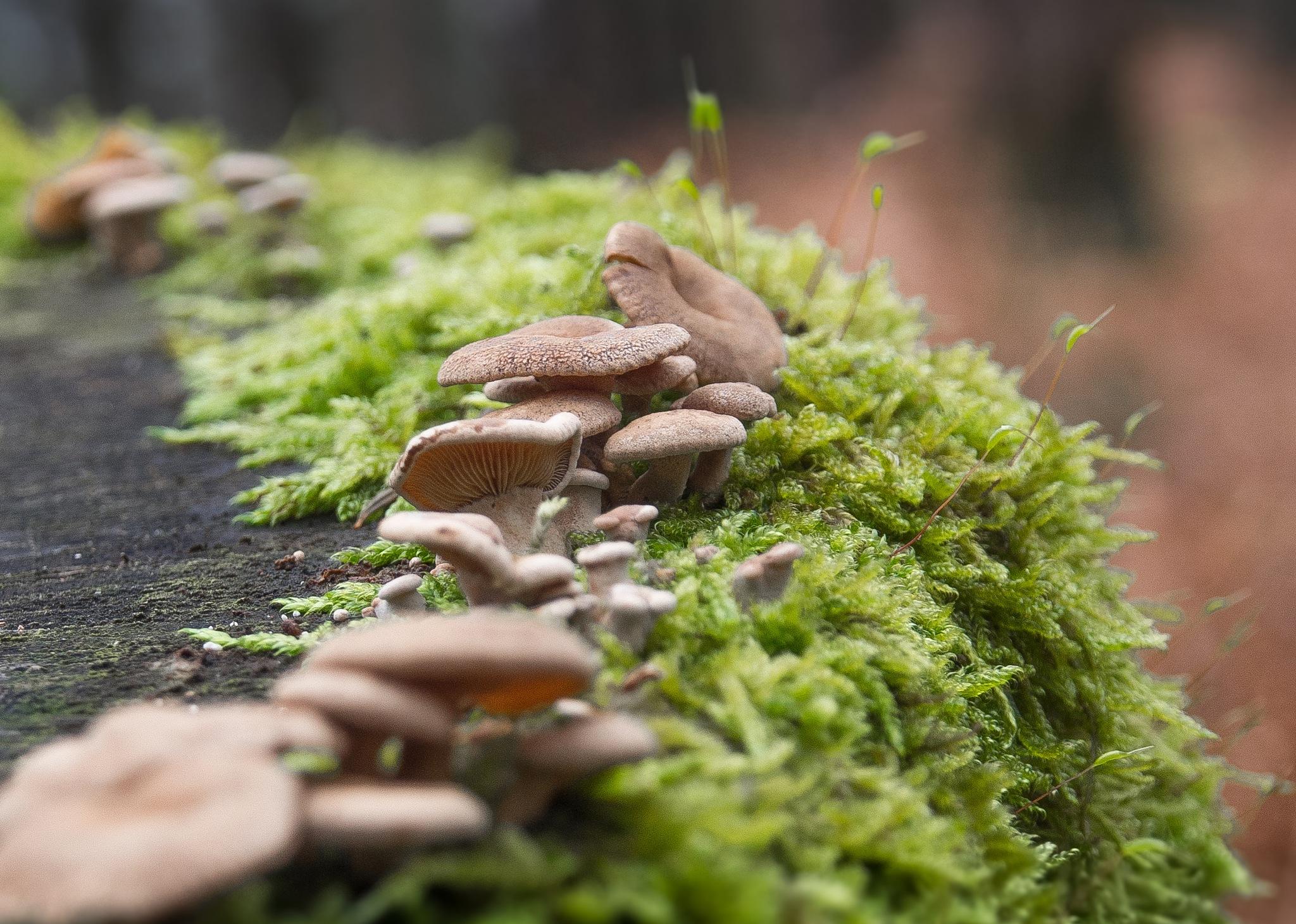 POV : Mushrooms invasion ! by Philippe Dugout
