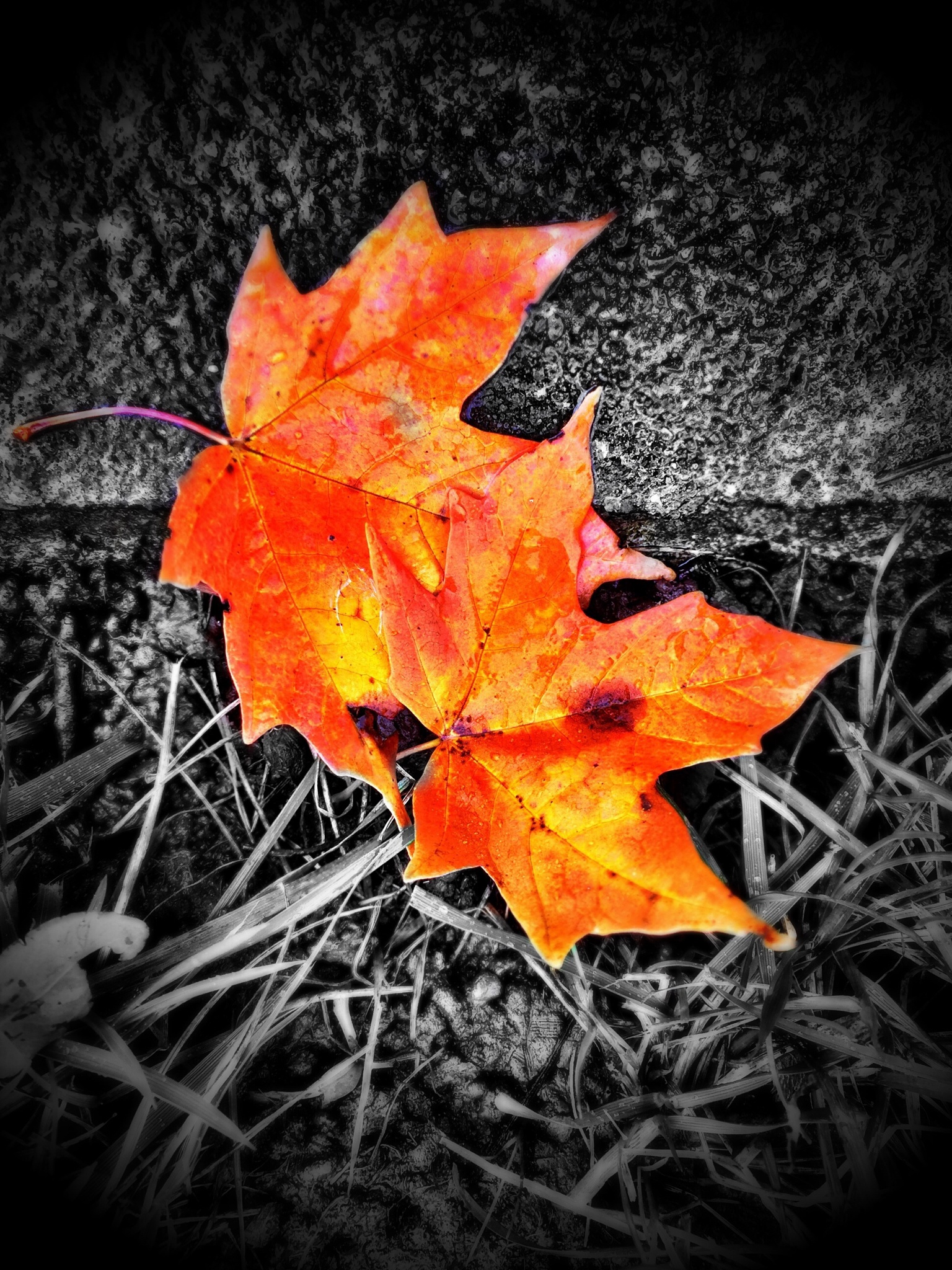 Fall Leaves  by D.E.Terry