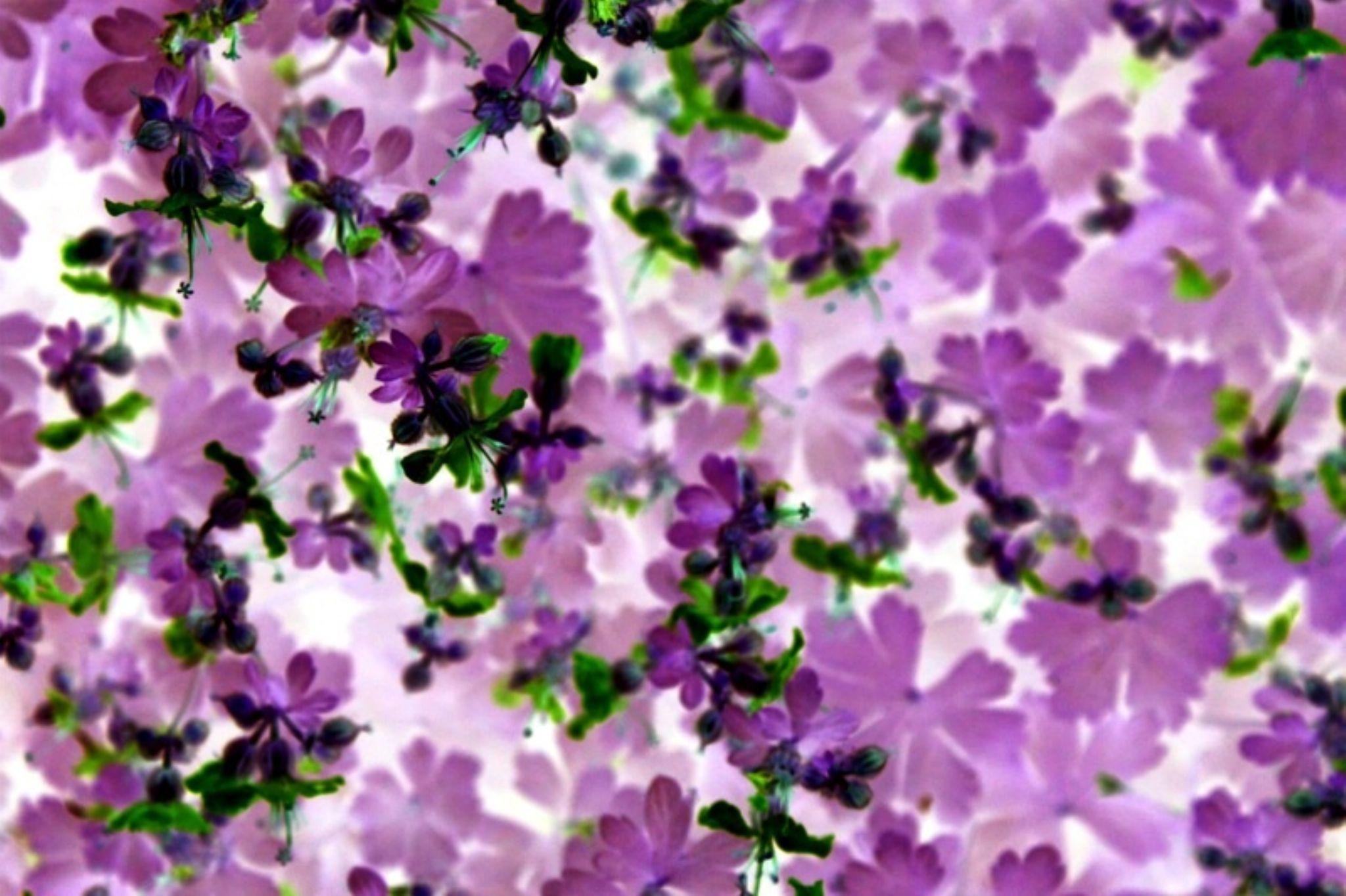 Flowers by Erol Hasan