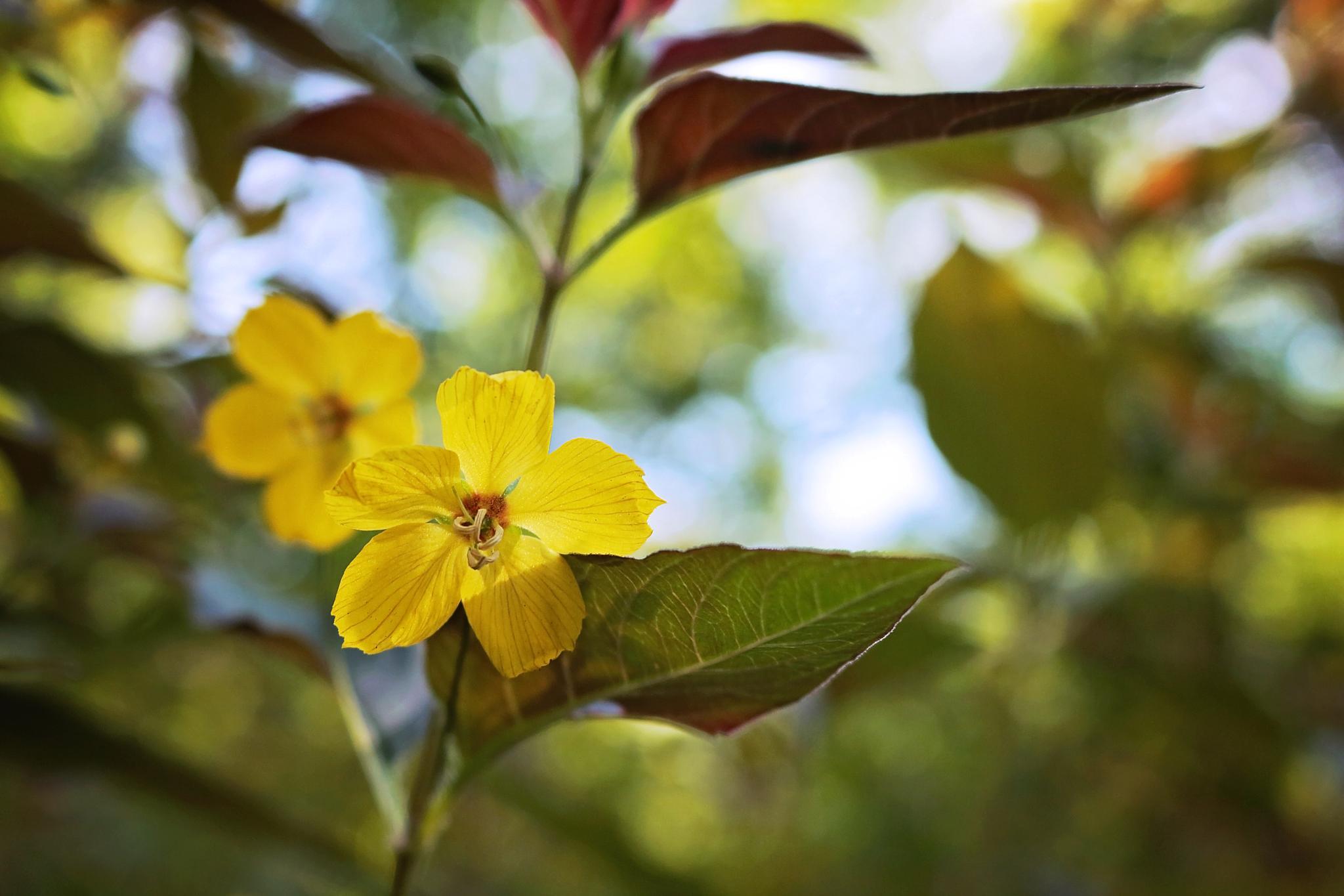summer yellow by Susanne Barnes