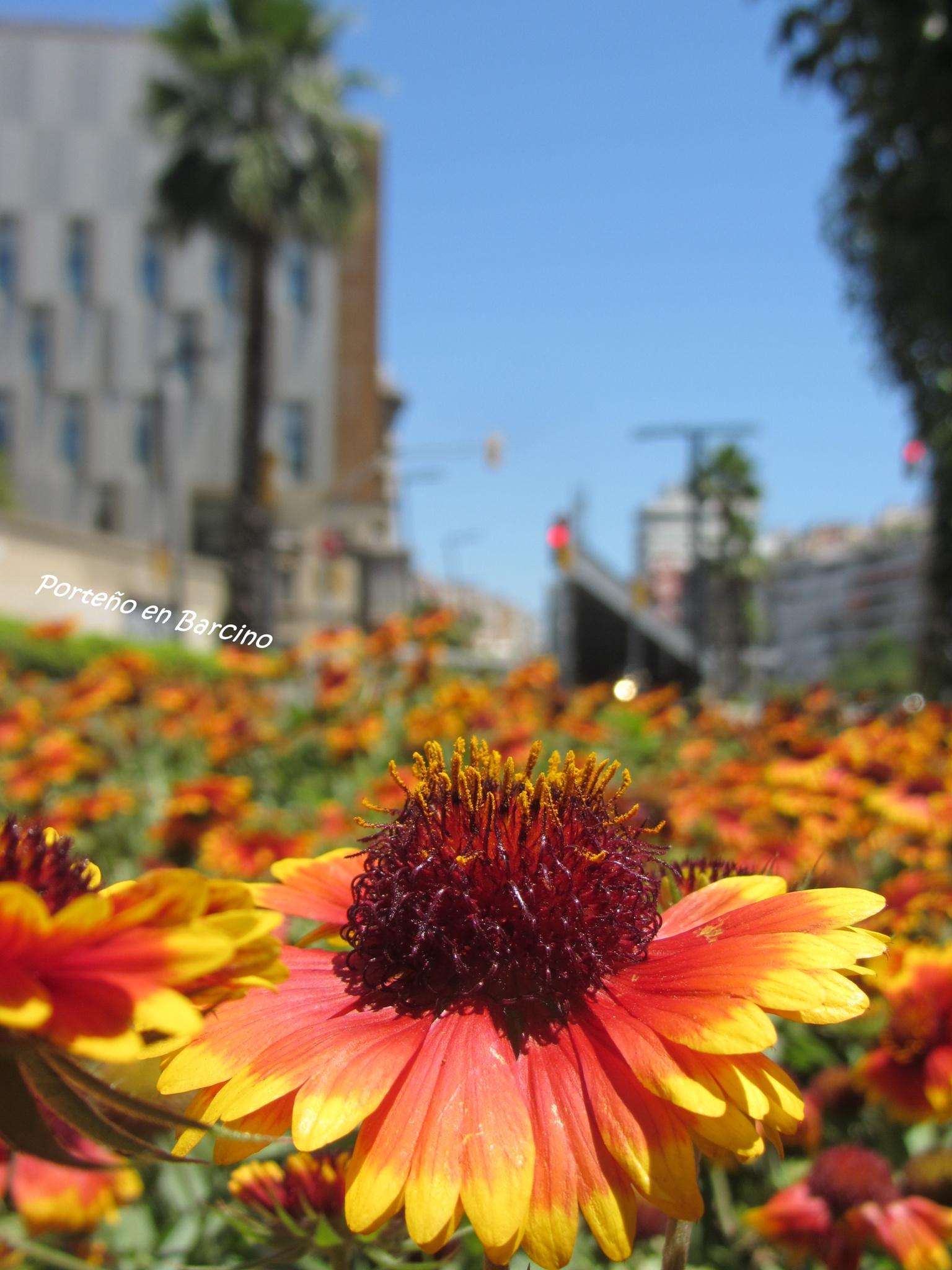 Flower power by PortenyoBarcino