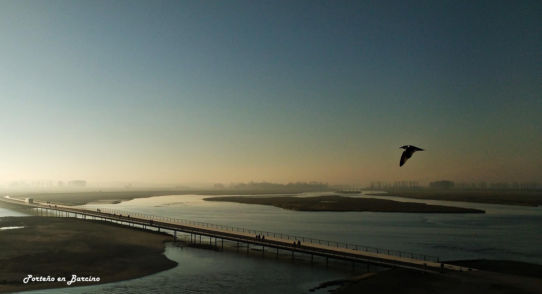 Flying at sunrise by PortenyoBarcino