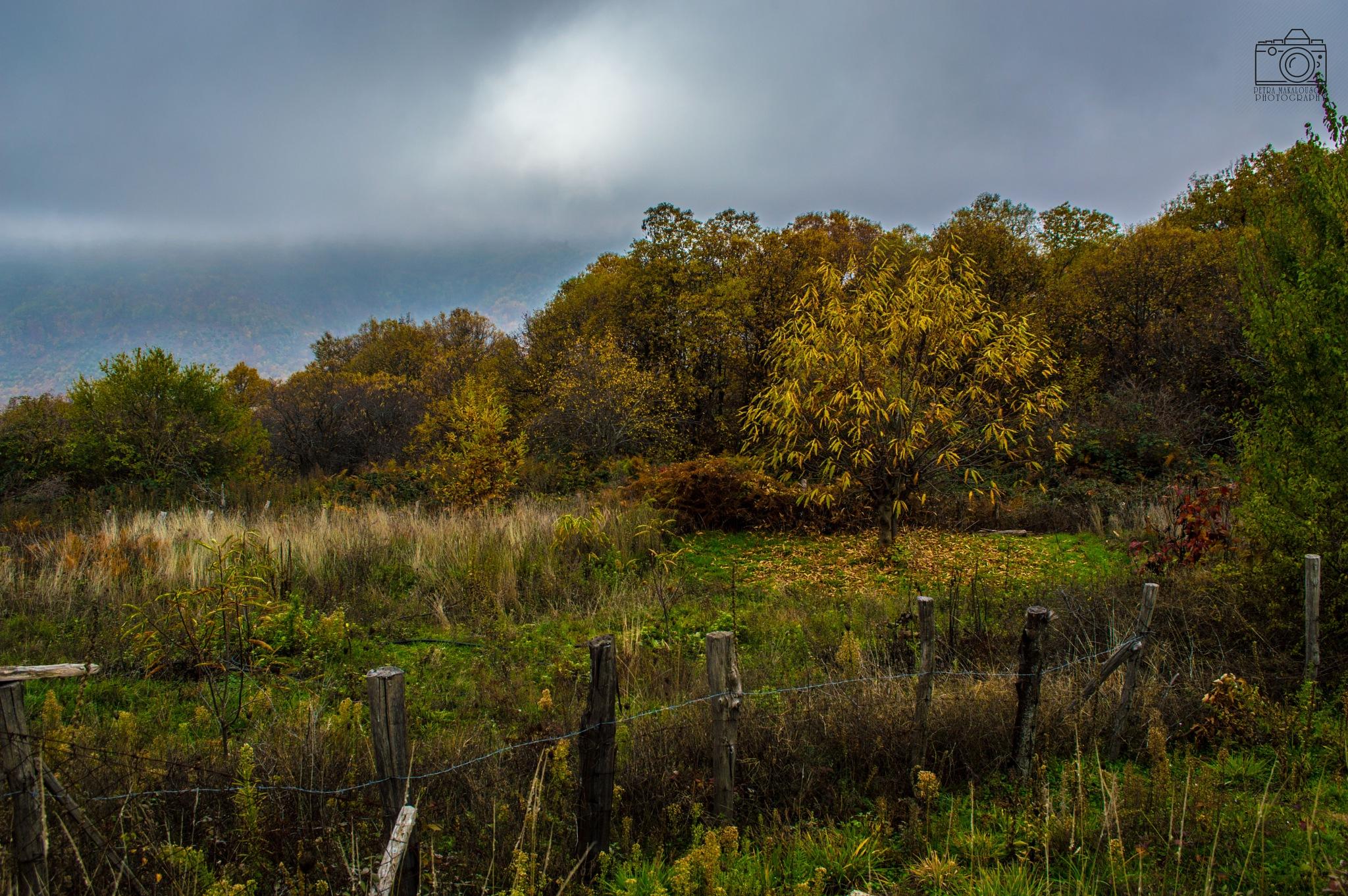 Autumn three  by PetraMakalousova