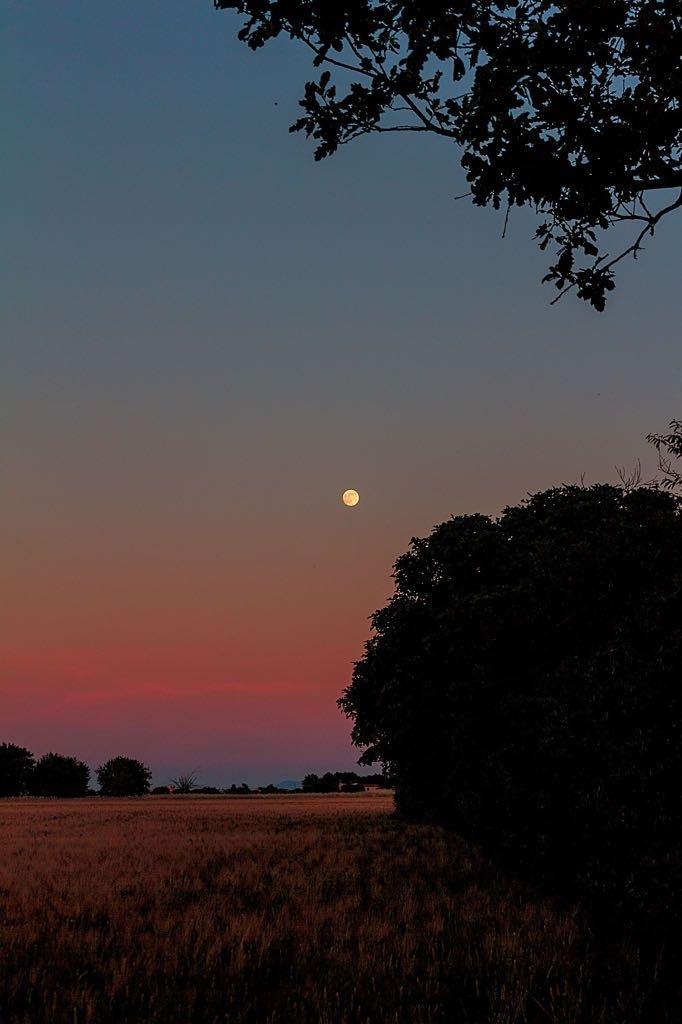 moon by Luca Belogi