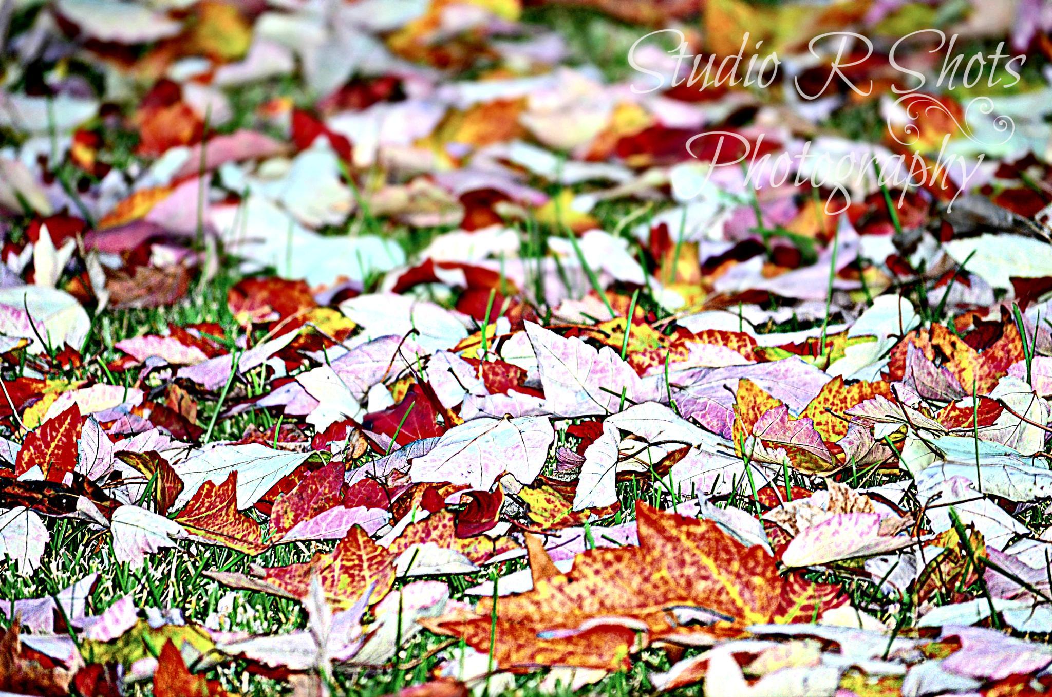 fallen leaves by Angie Peters Reszinski