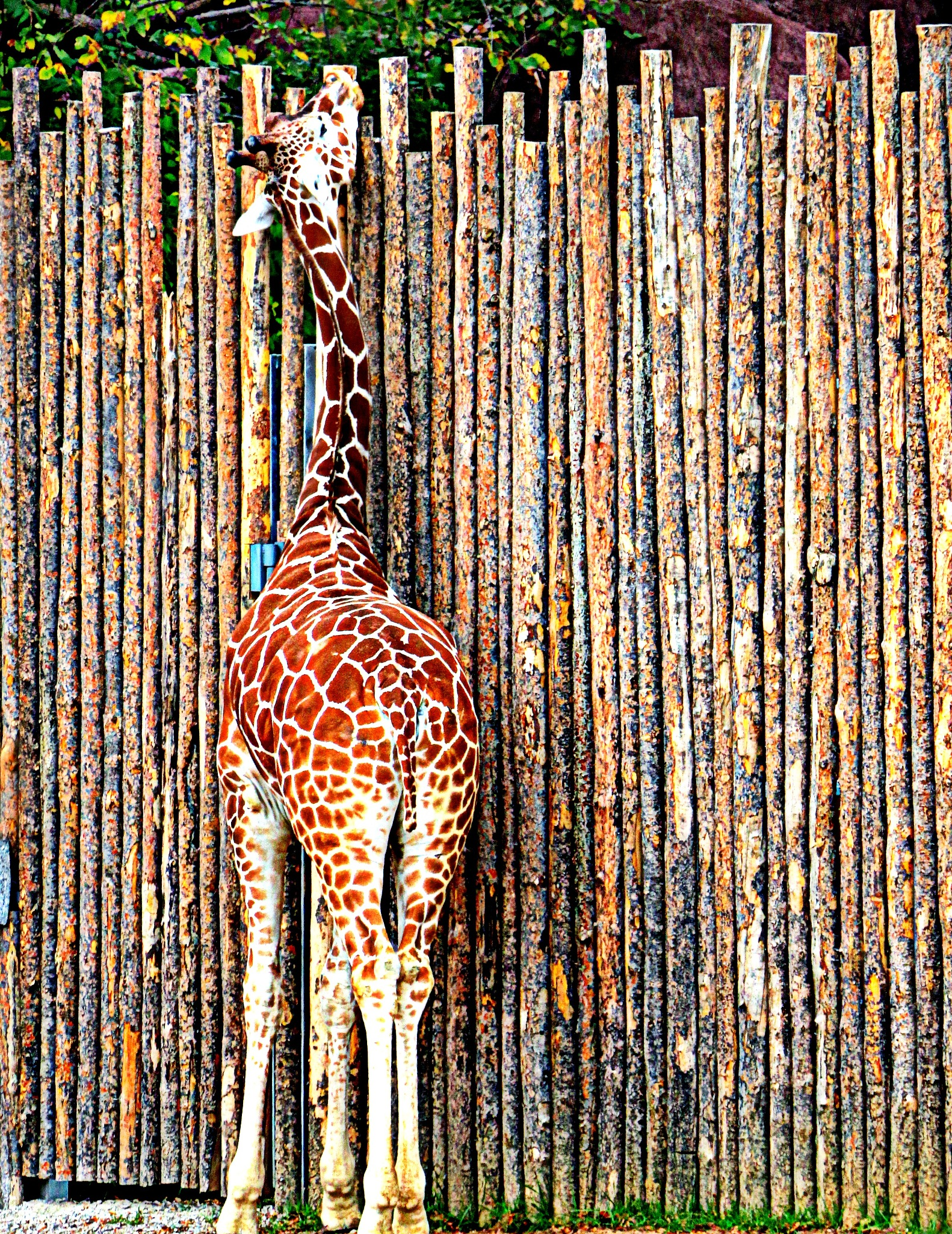 tall by Angie Peters Reszinski