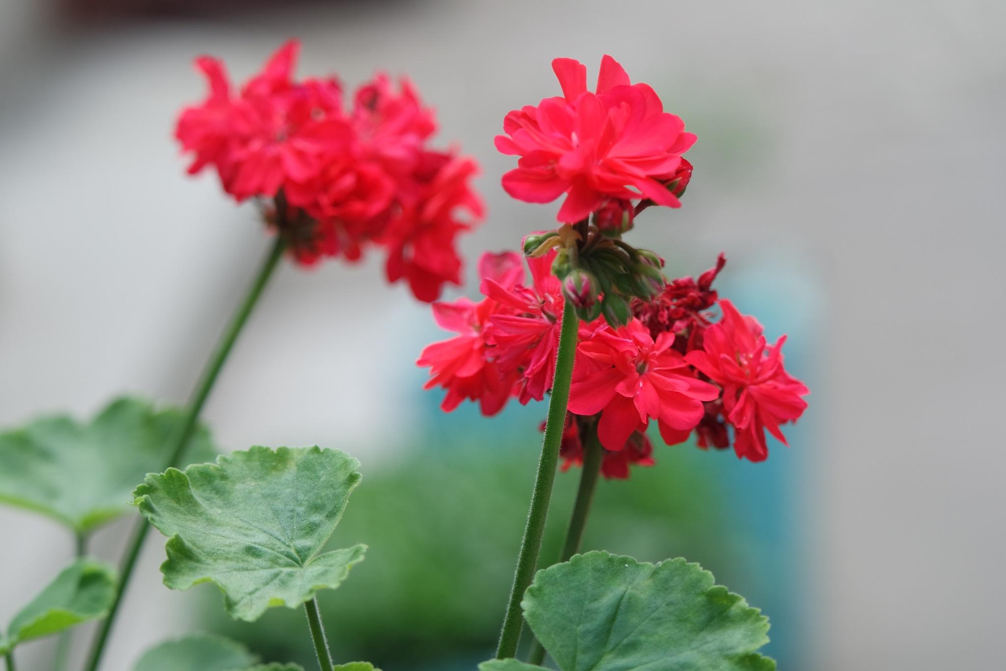 flower 3 by Rajesh Khurana