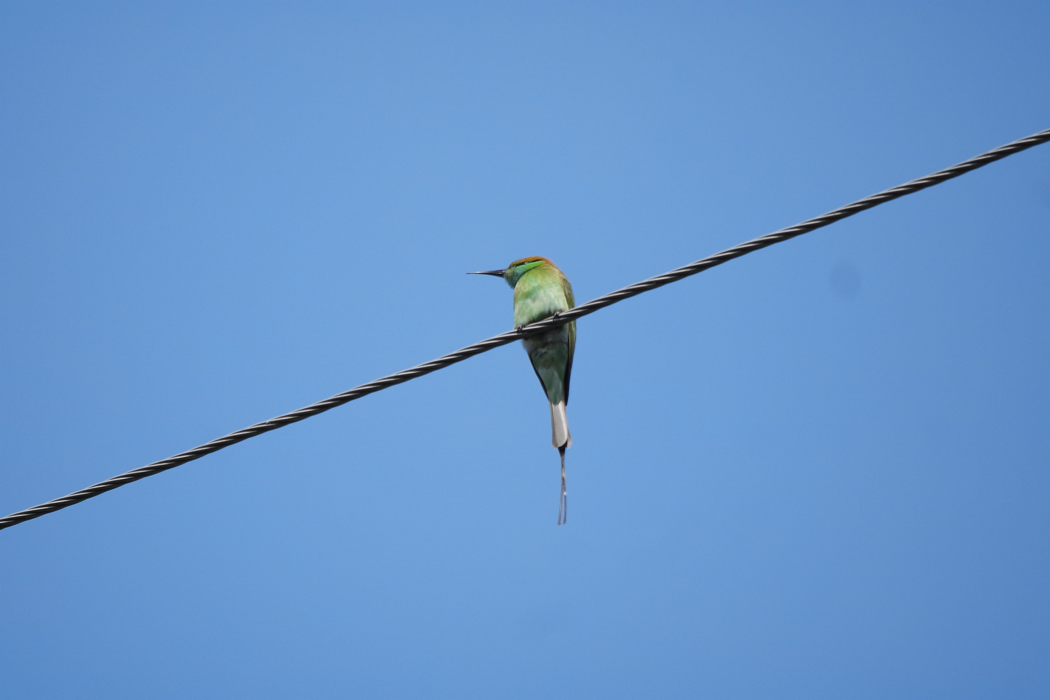 beautiful bird  by Rajesh Khurana
