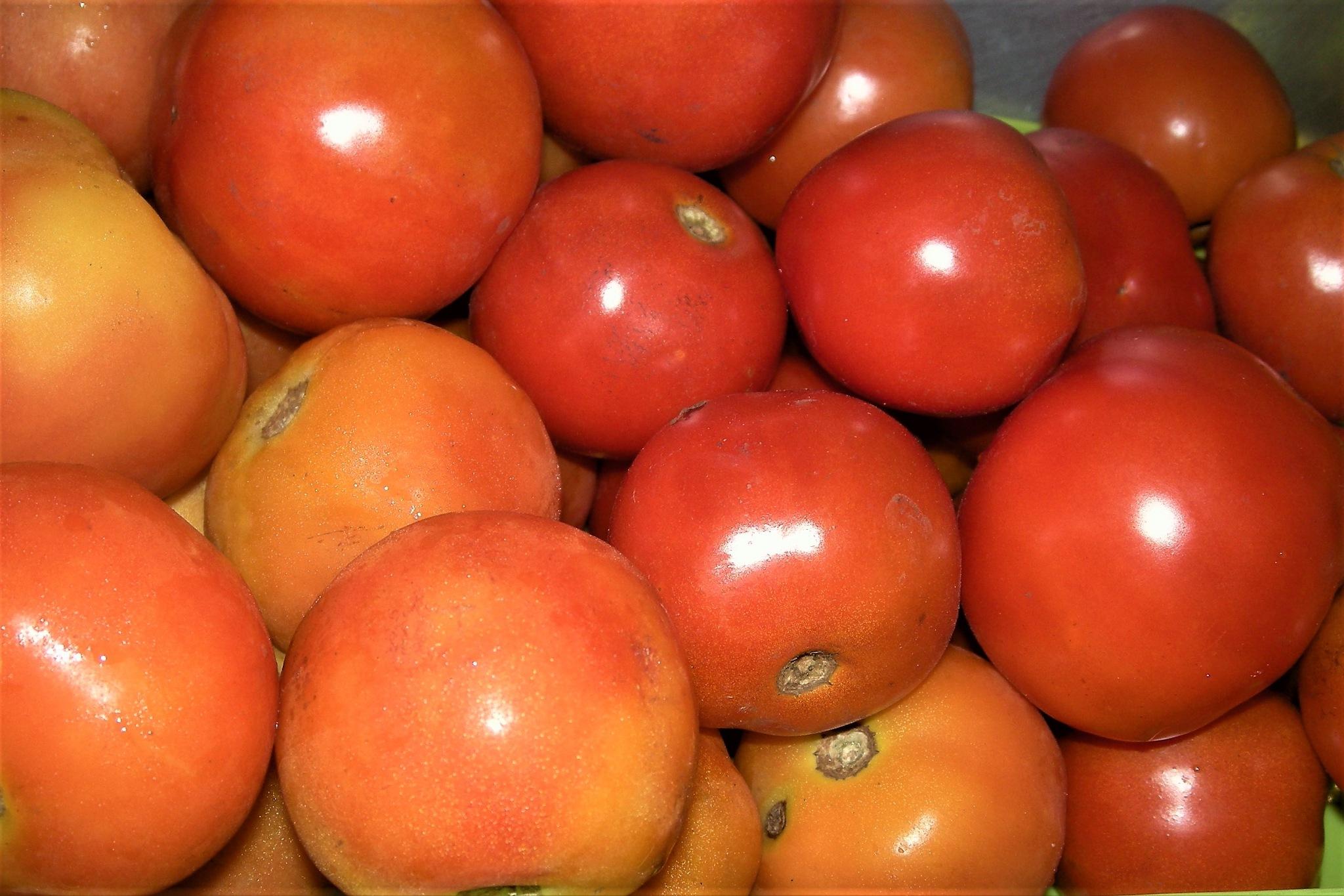 red tomato's by Rajesh Khurana