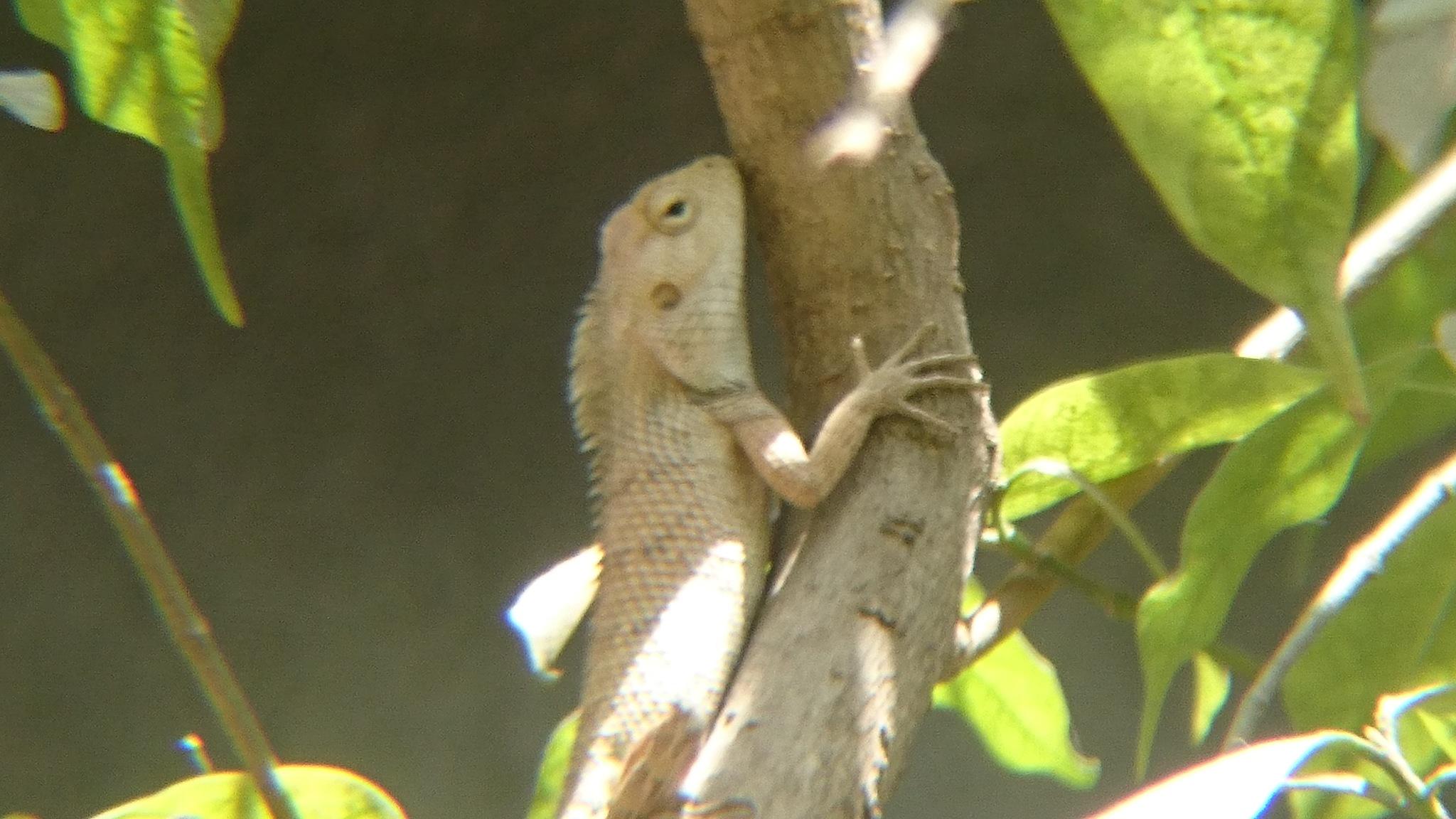Chameleon  by Rajesh Khurana