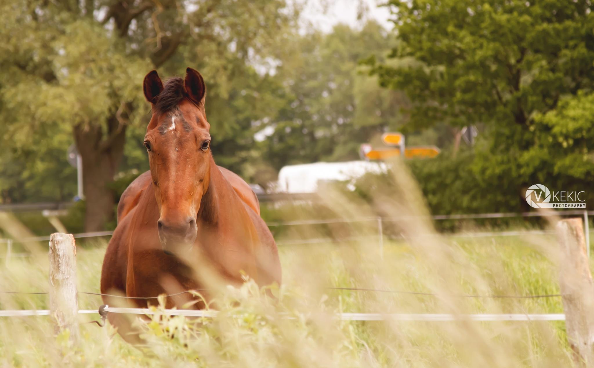 Horse Power by v_kekic