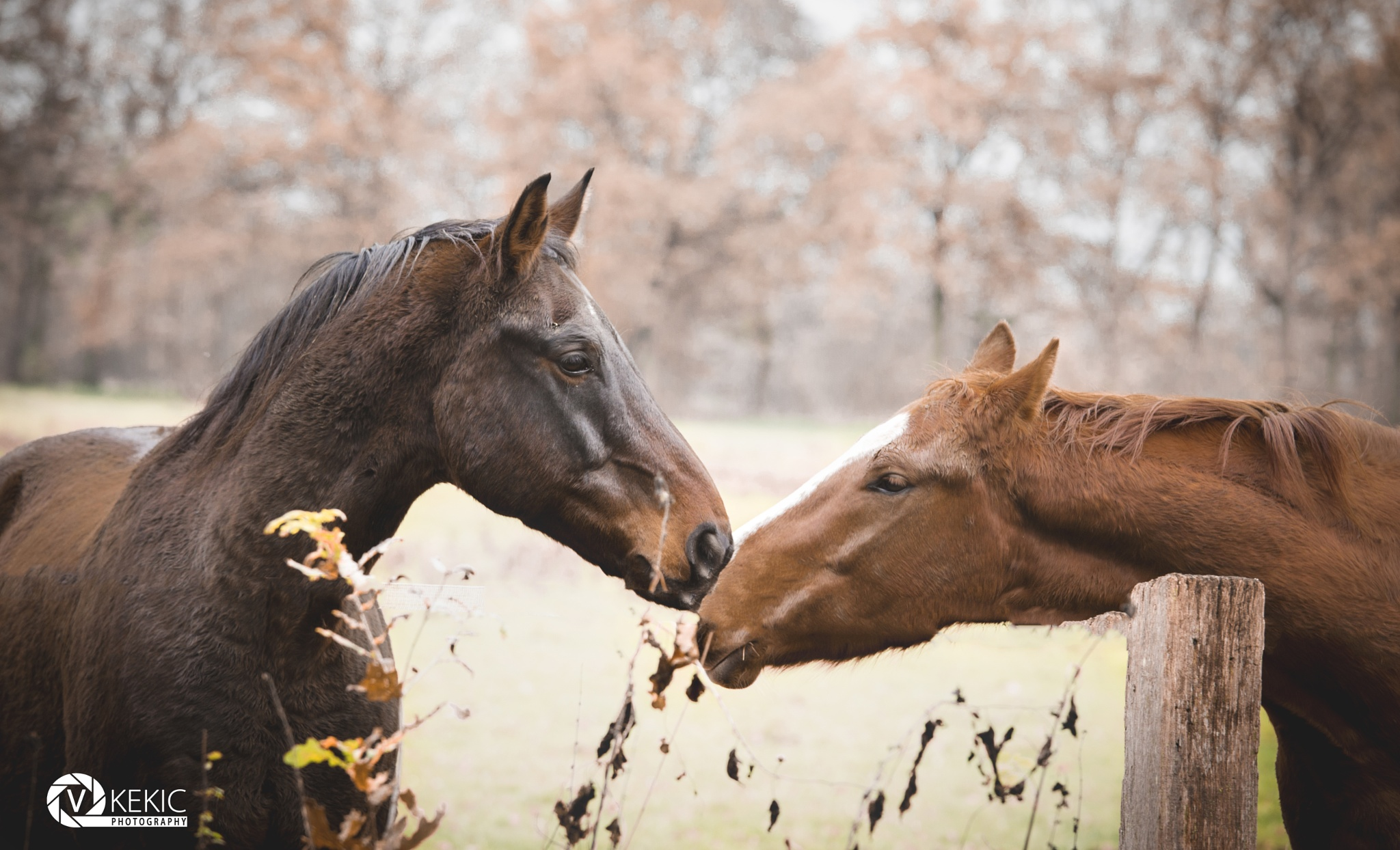 Horse Love... by v_kekic