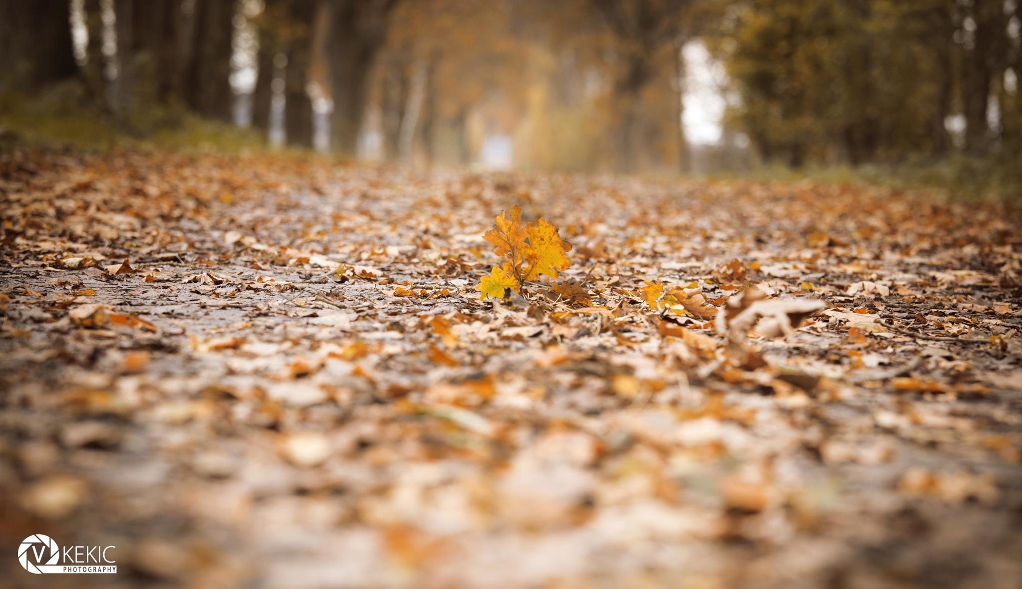 Leaf... by v_kekic
