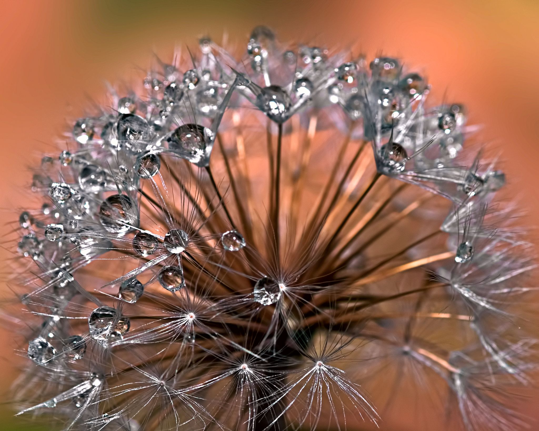 Droplets in suspension by Loscar
