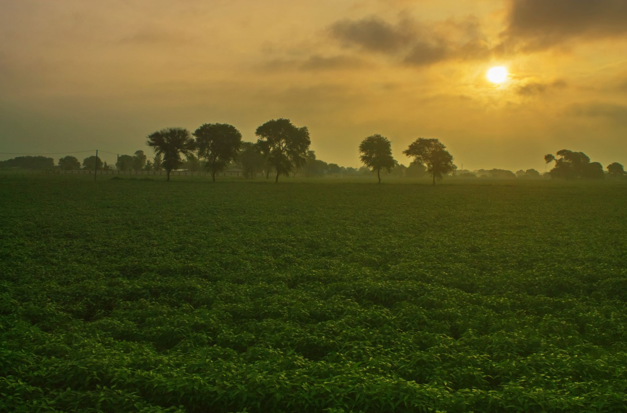 Morning Raga by Abhishek