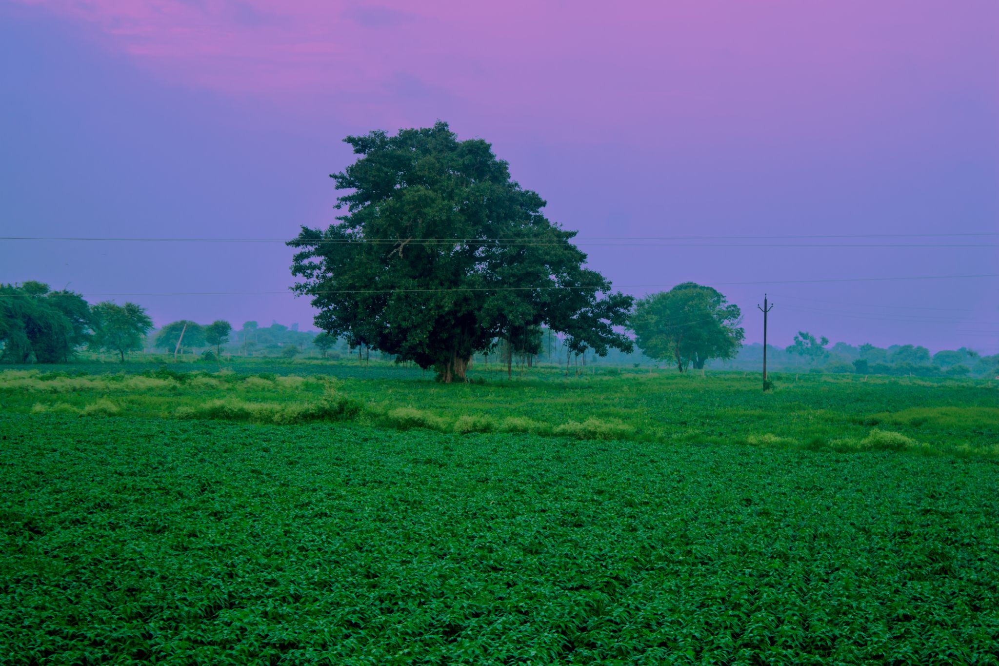 Evening Hues by Abhishek