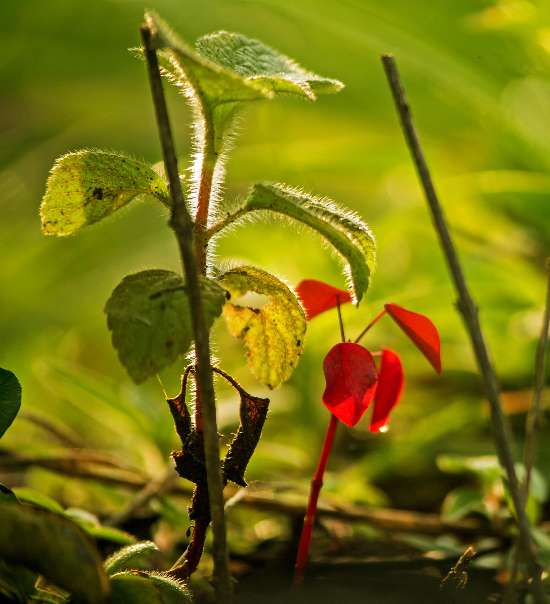Photo in Nature #sunlight #plant #red