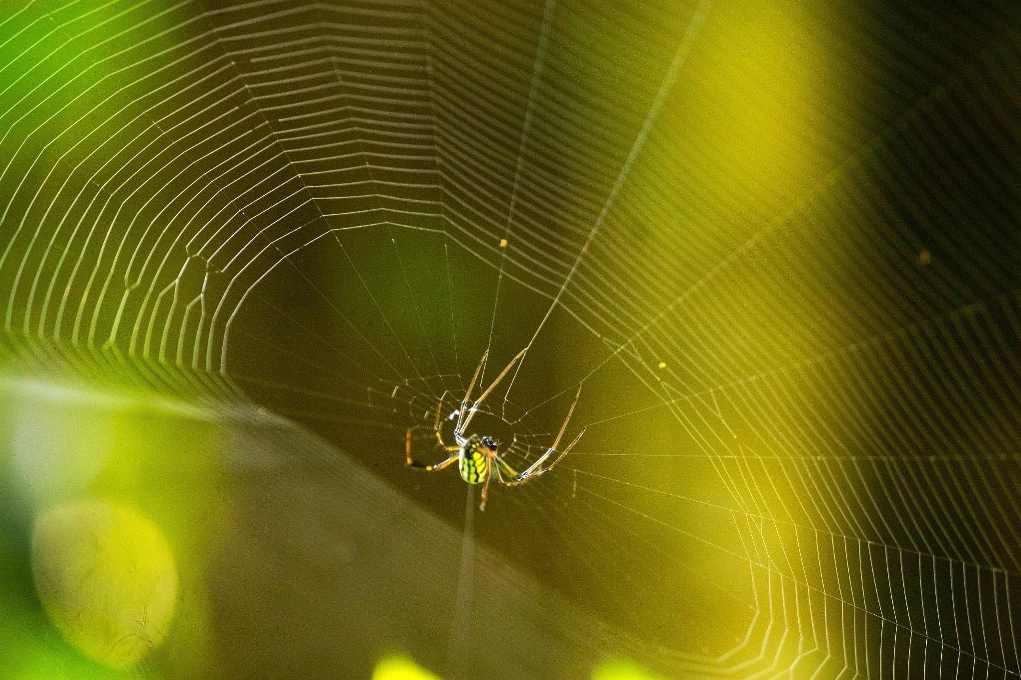 spider web by Abhishek