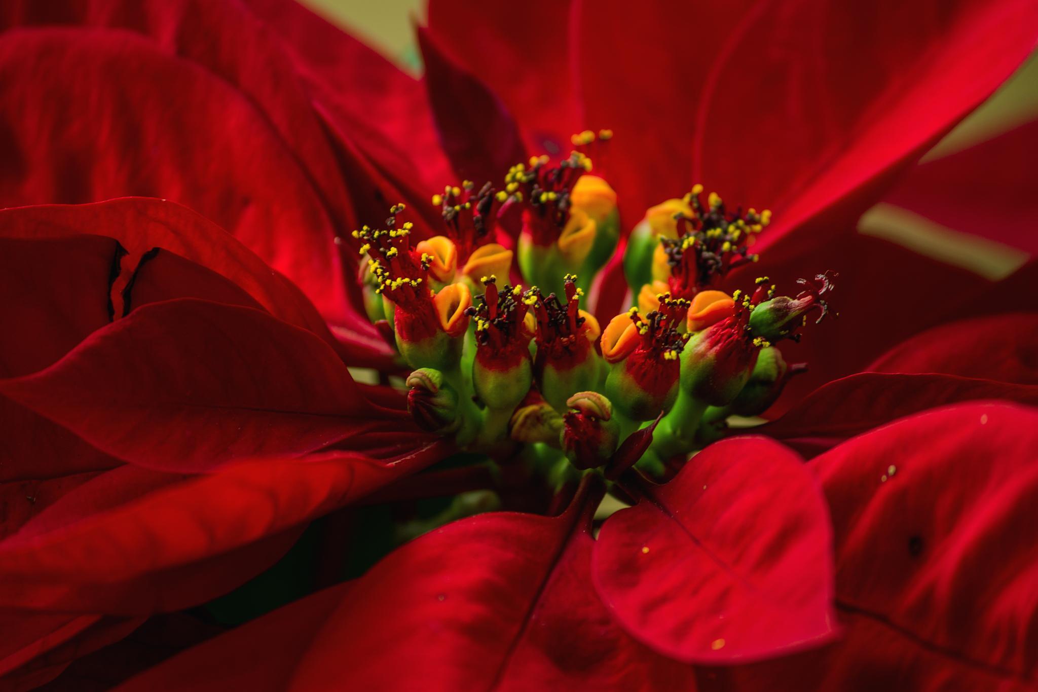 Red Velvette by Abhishek