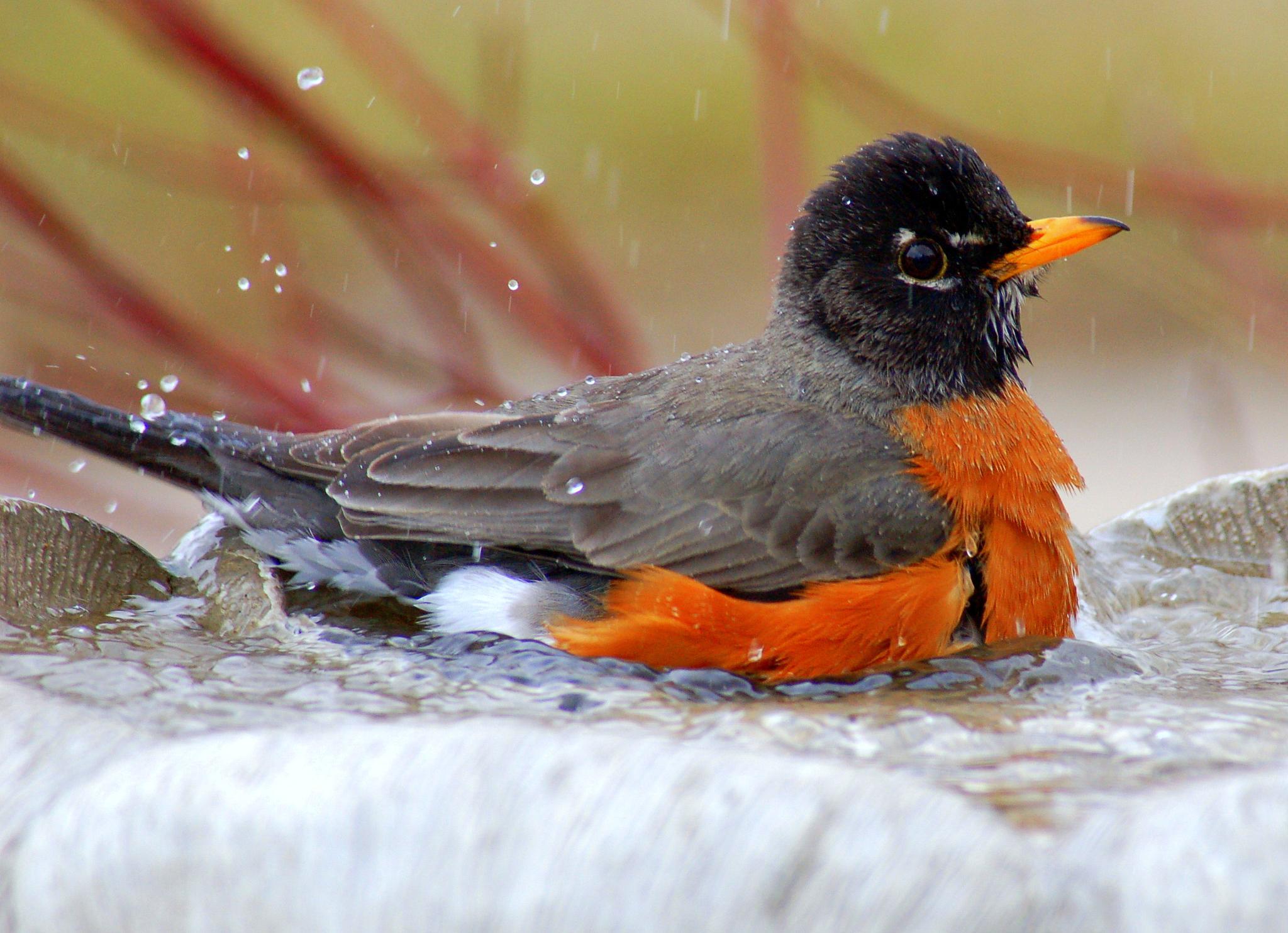 bathing by thegeek