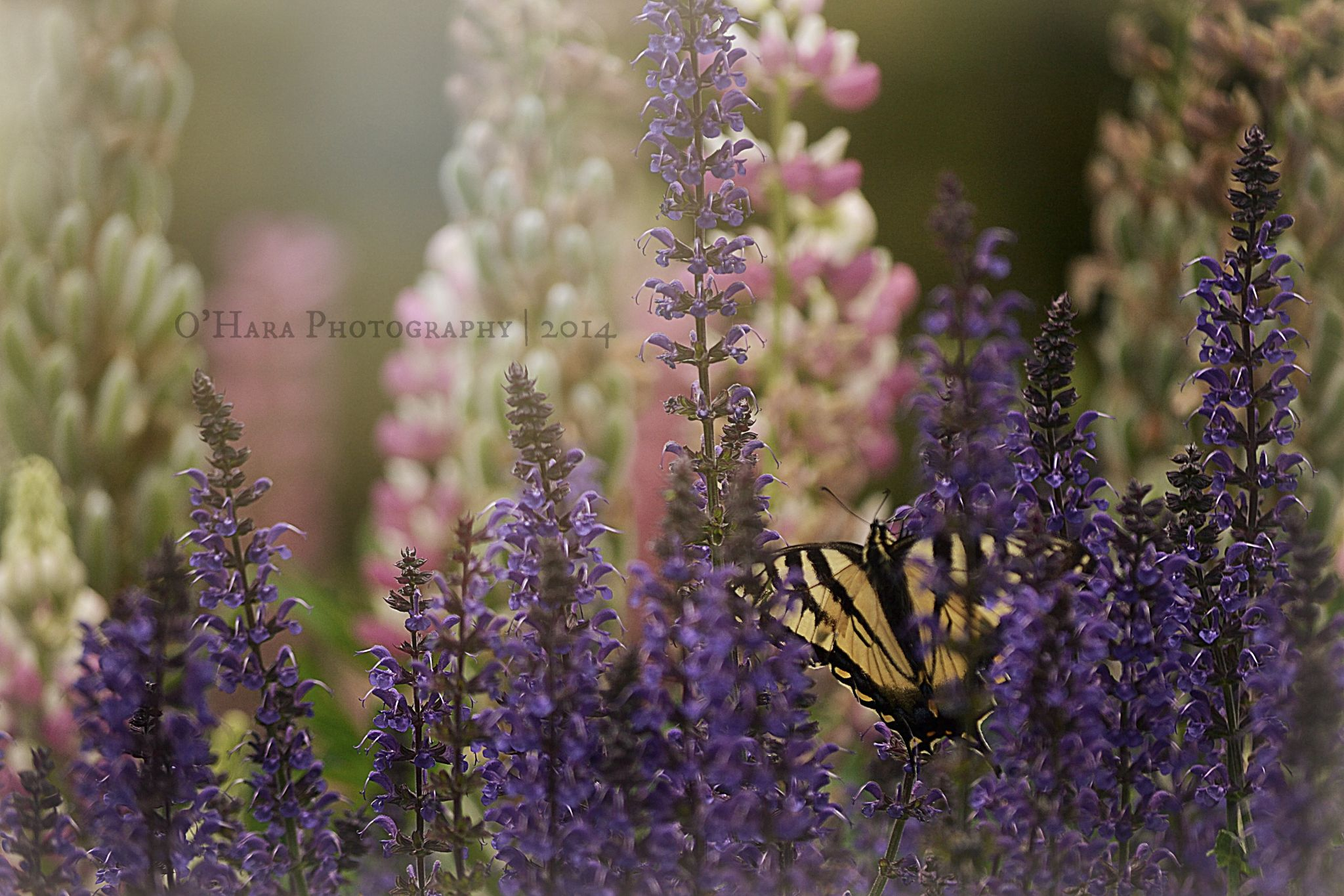 Life is like a butterfly. You can chase it, or  you can let it come to you. by Jenn O'Hara