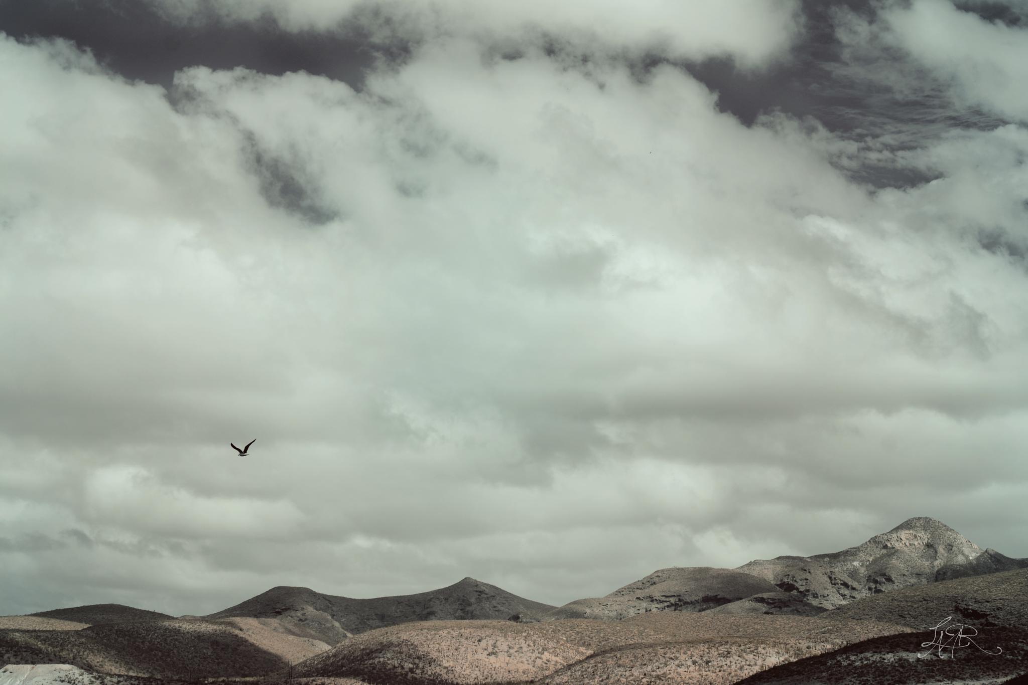 Montañas de la Paz, Méx.  by Lari Moreno