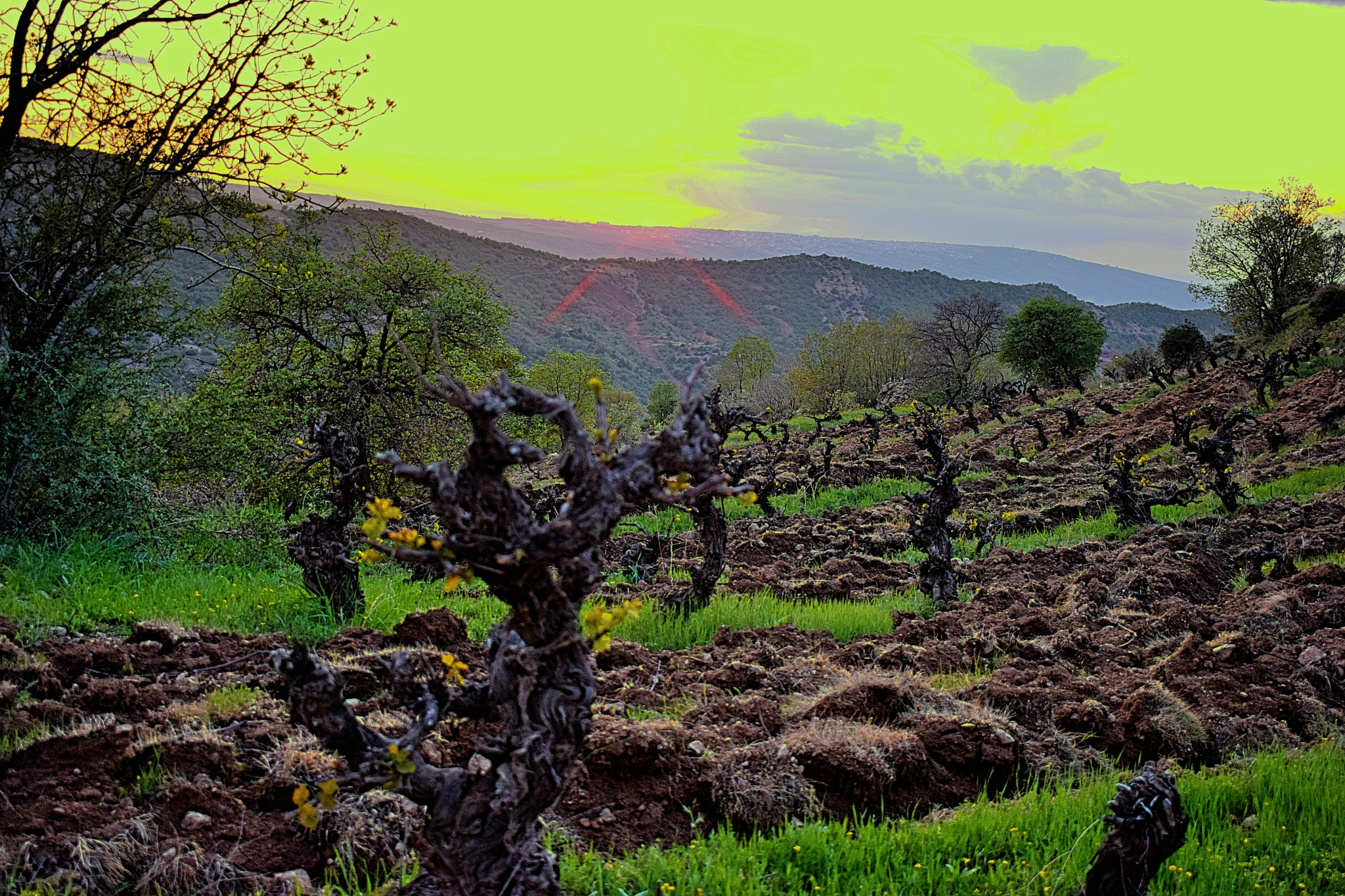 Grape Tree Farm  by Barzo