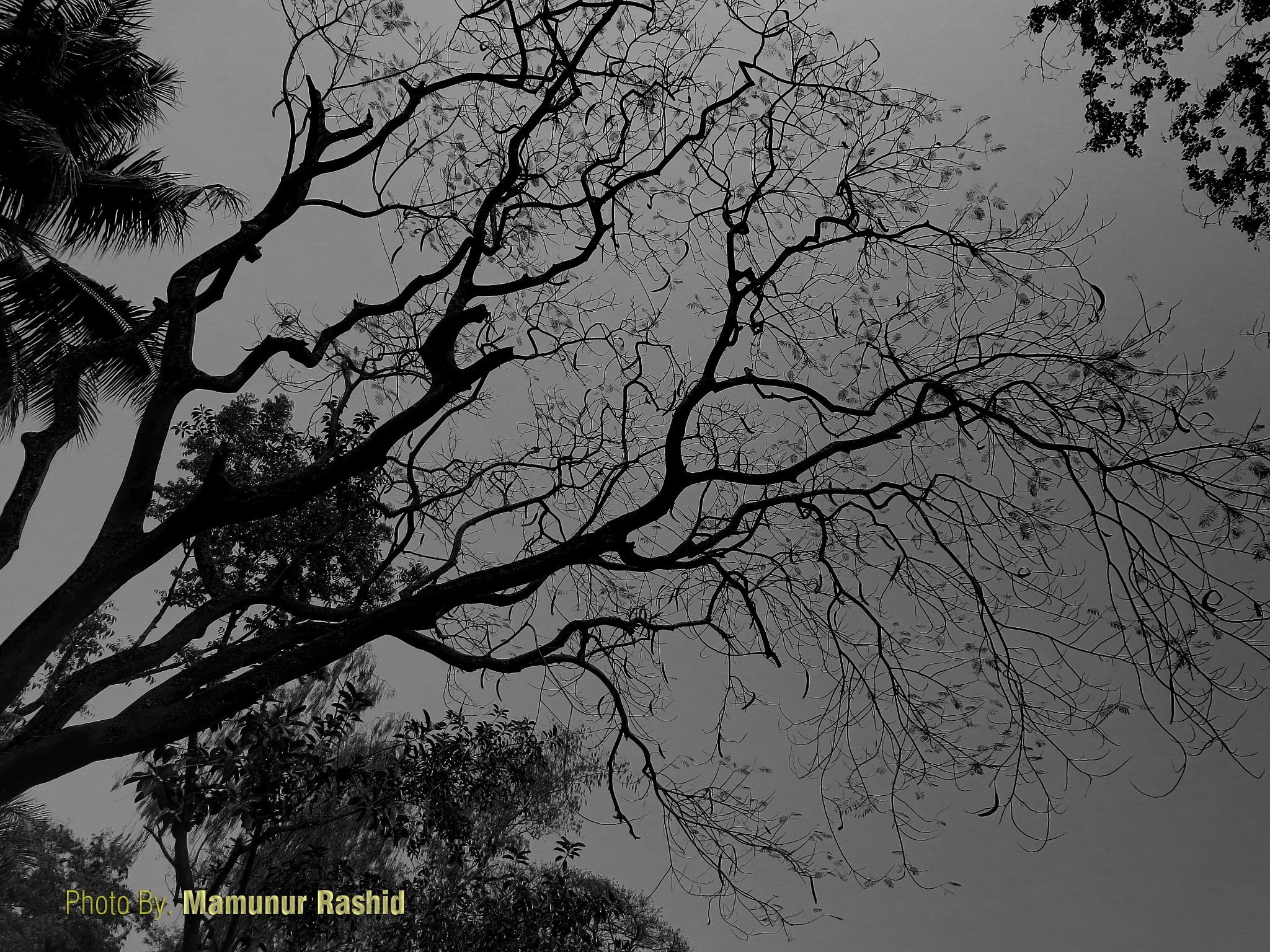 Untitled by Mamunur Ráshid