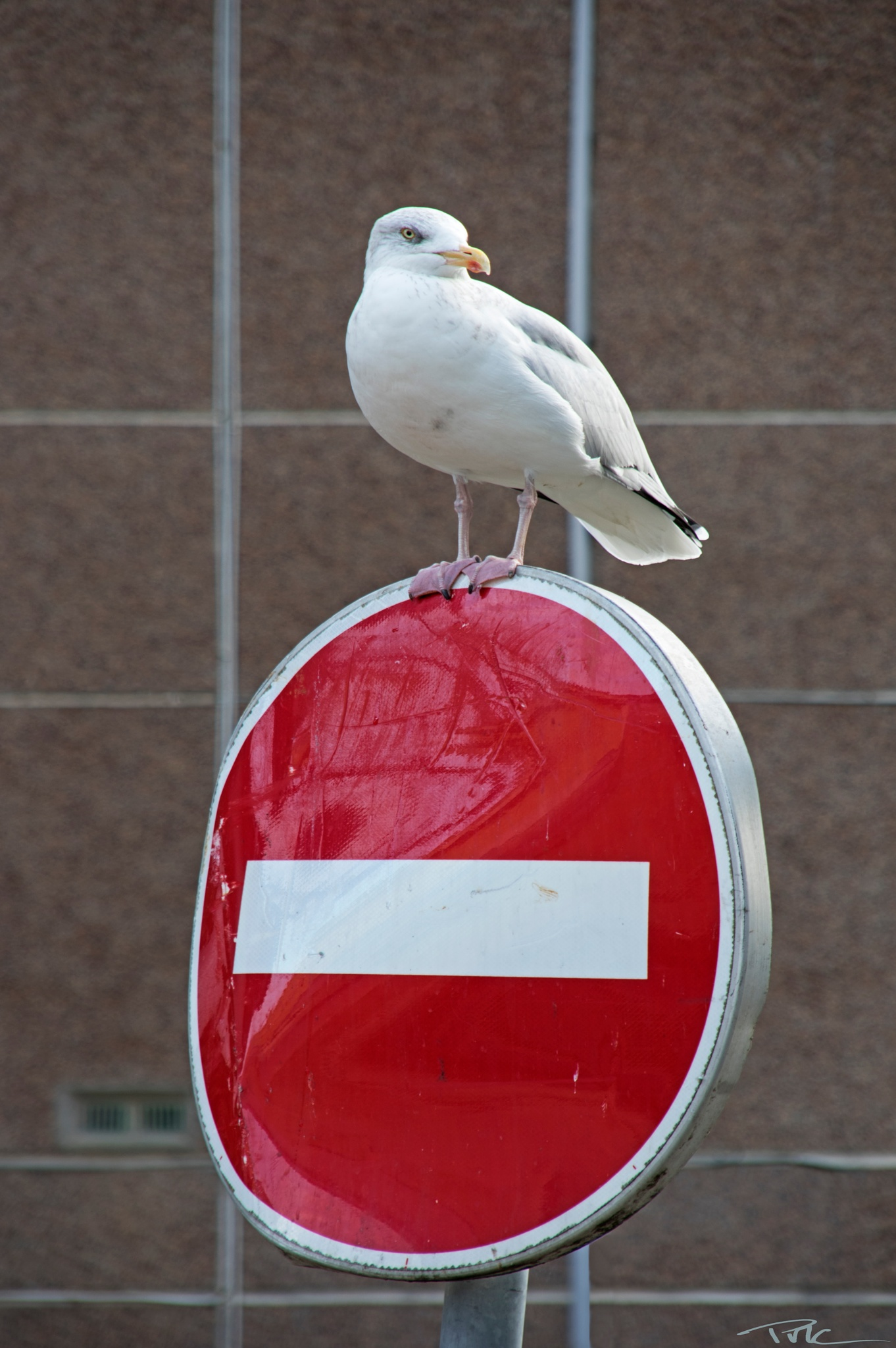 Photo in Animal #gull #bird #no entry