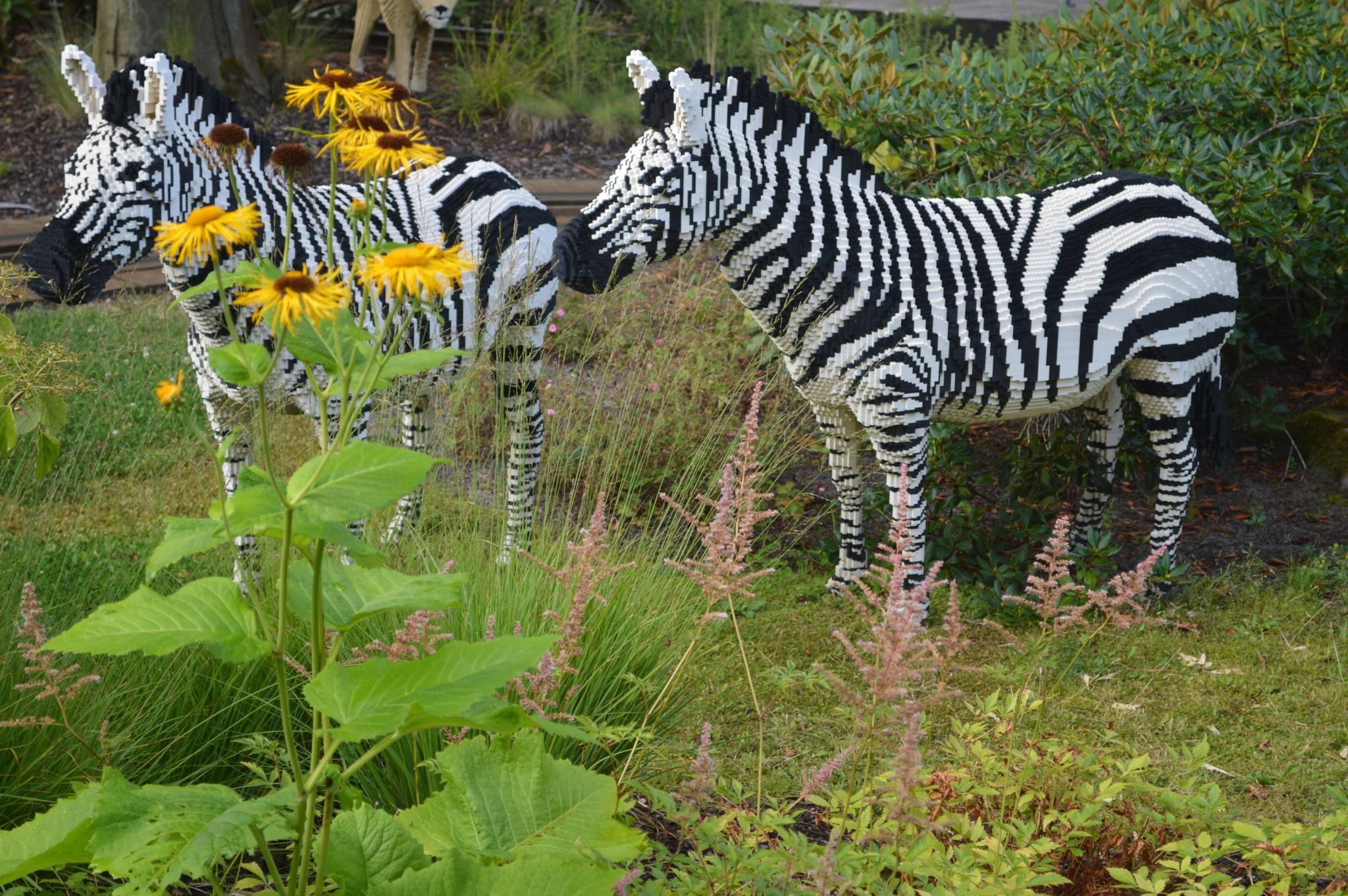 lego zebra  by Ramzan Rafique