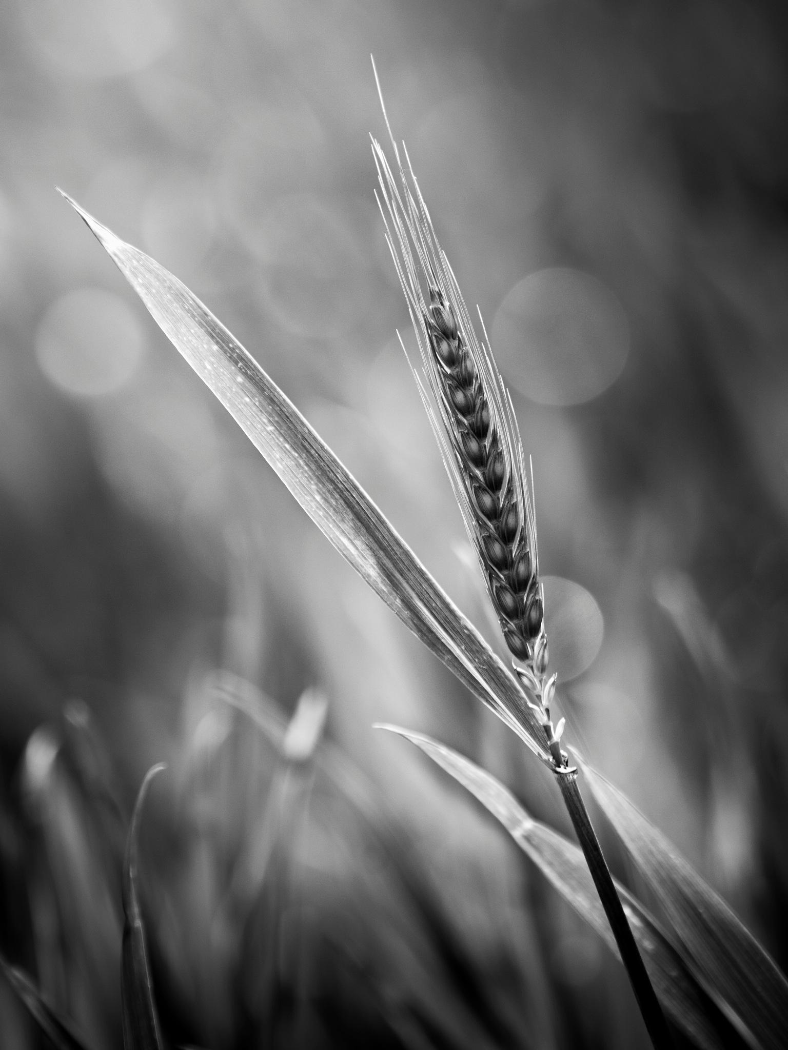 Morning Light by Ian Farrugia