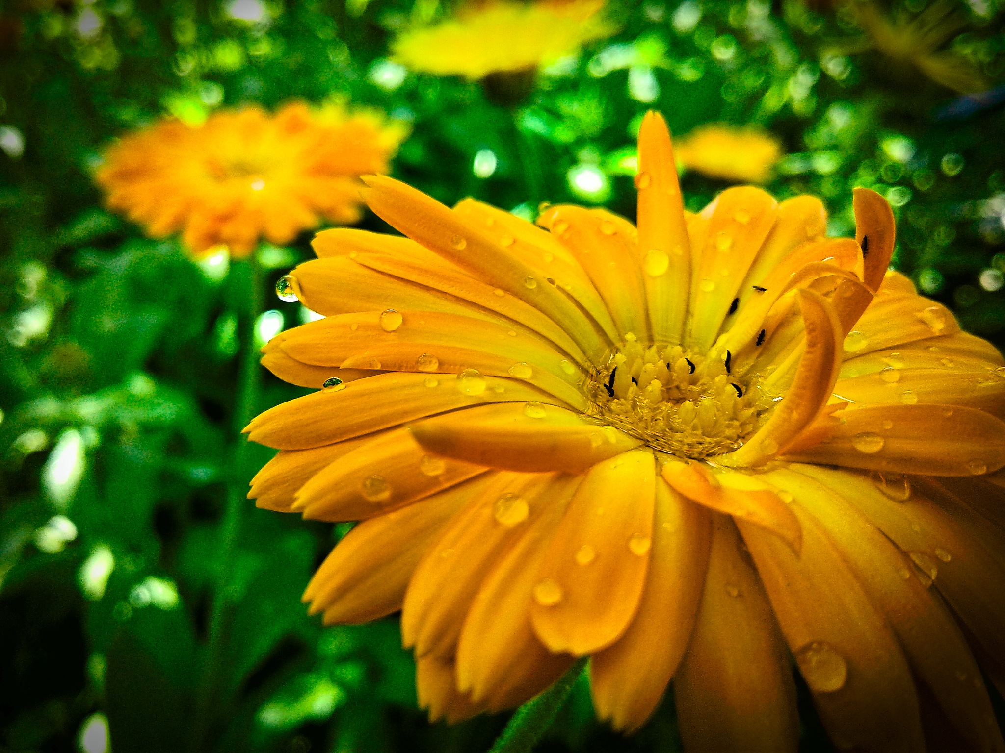 Orange flower by Евгений Козлов