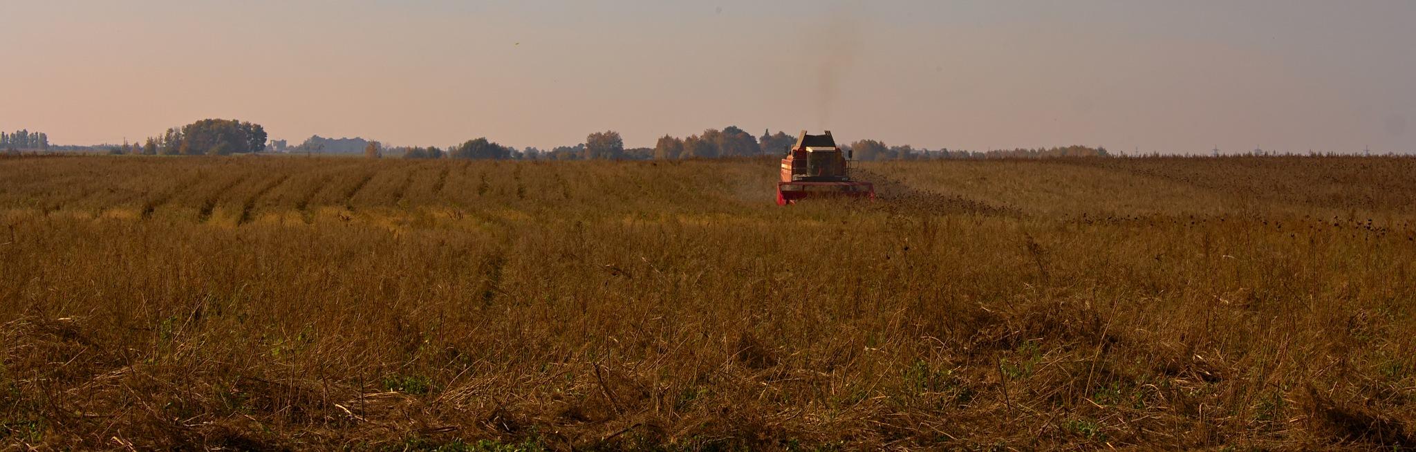 Working in the fields by Евгений Козлов